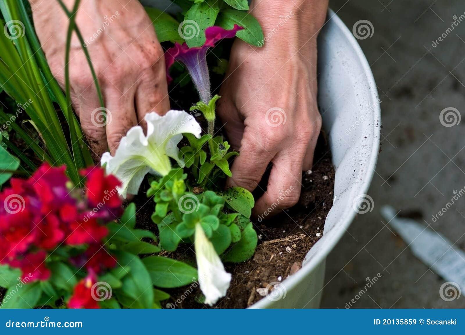 Jardin plantation des fleurs images libres de droits for Plantation de fleurs