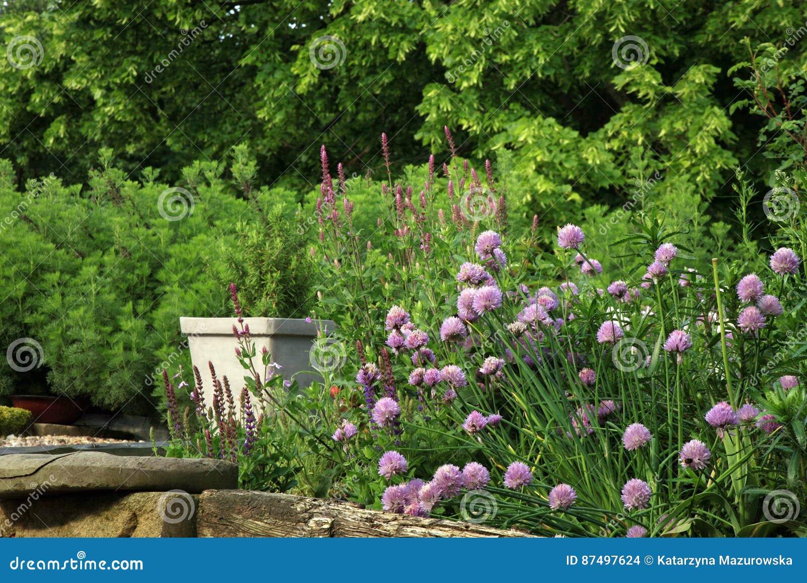 Jardin qui respecte l environnement de pays
