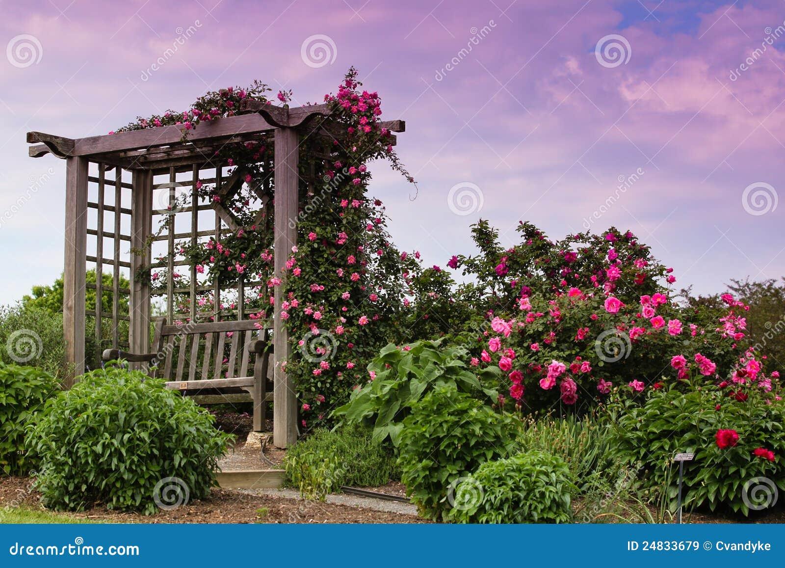 jardin rose de floraison va de flanc de coteau de roses de