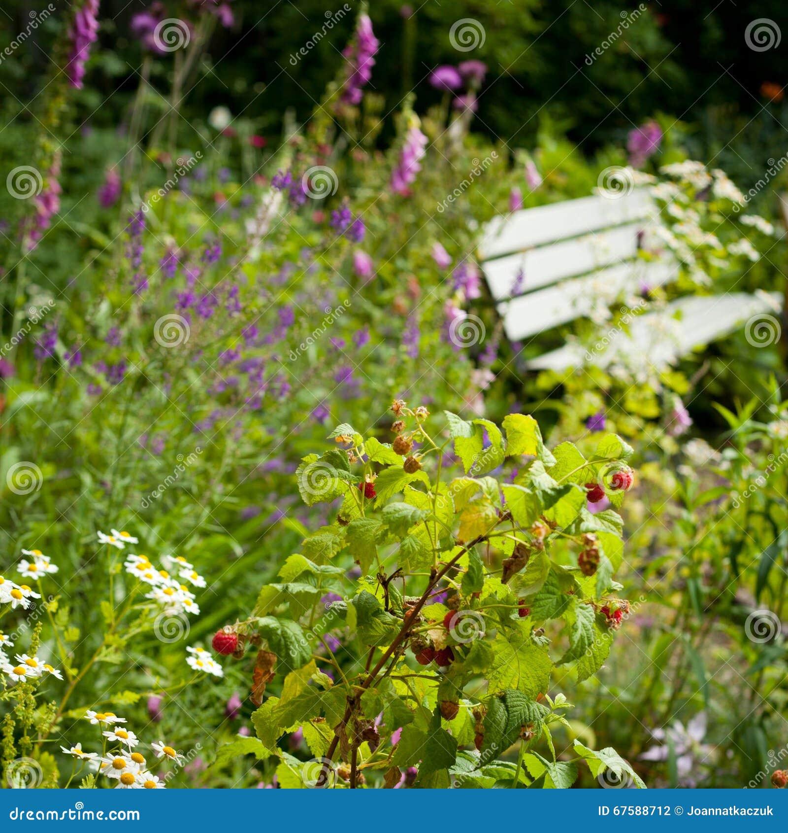 Jardin sauvage anglais photo stock image du path fleurs for Jardin sauvage