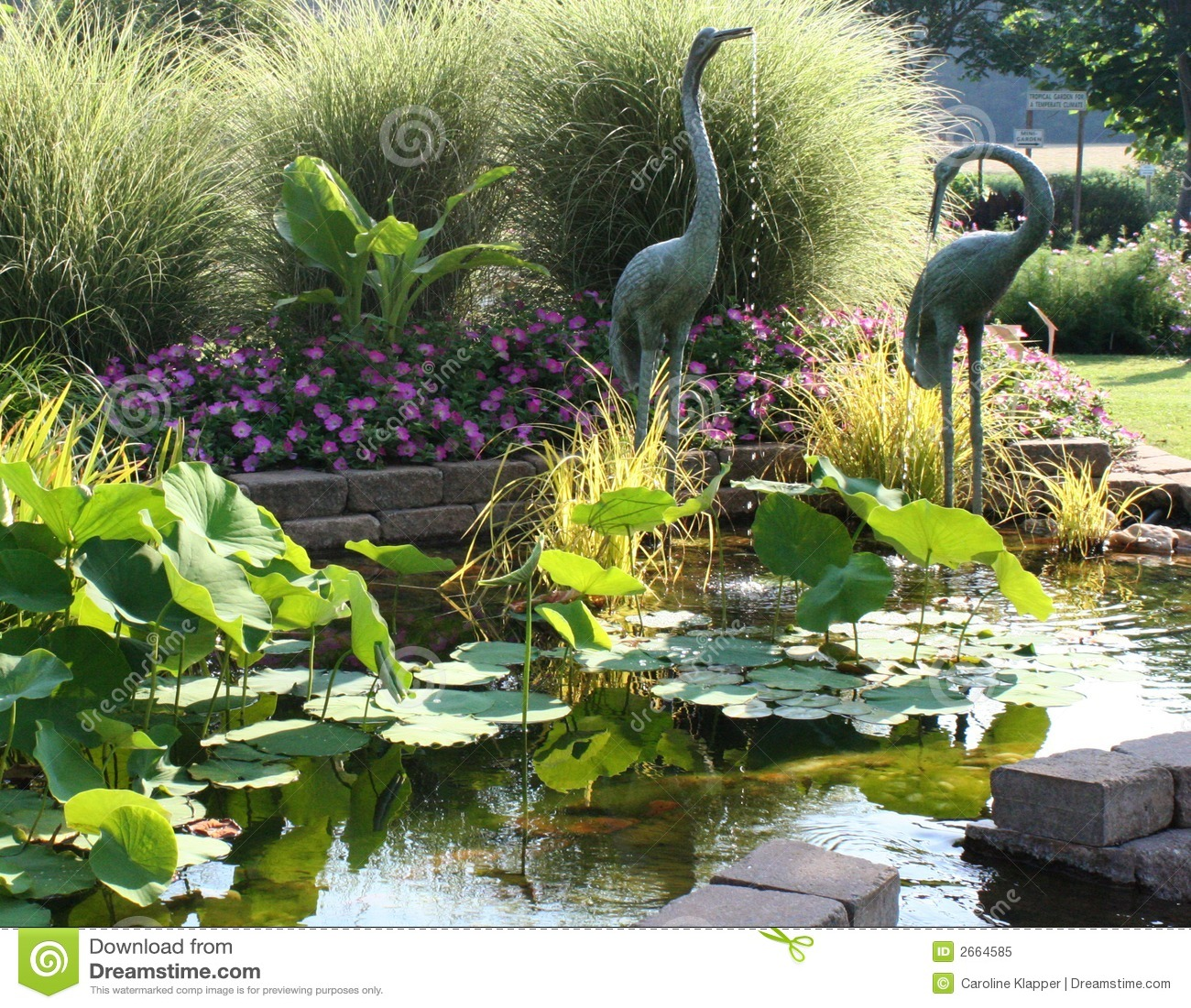 Jardin serein d 39 tang photo libre de droits image 2664585 for Etang jardin