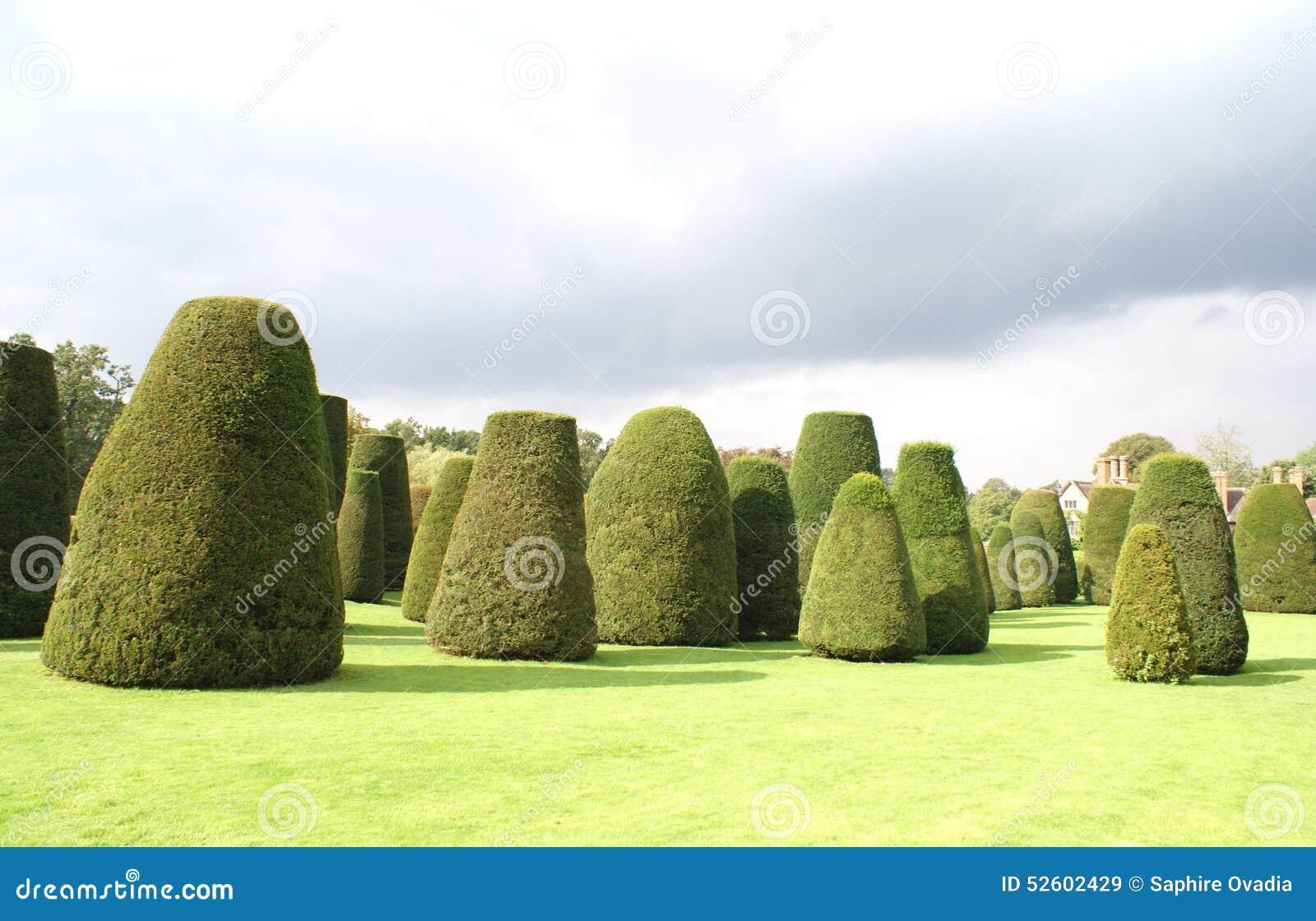 Jardin topiaire d 39 arbres d 39 if botanique image stock - Jardin topiaire ...