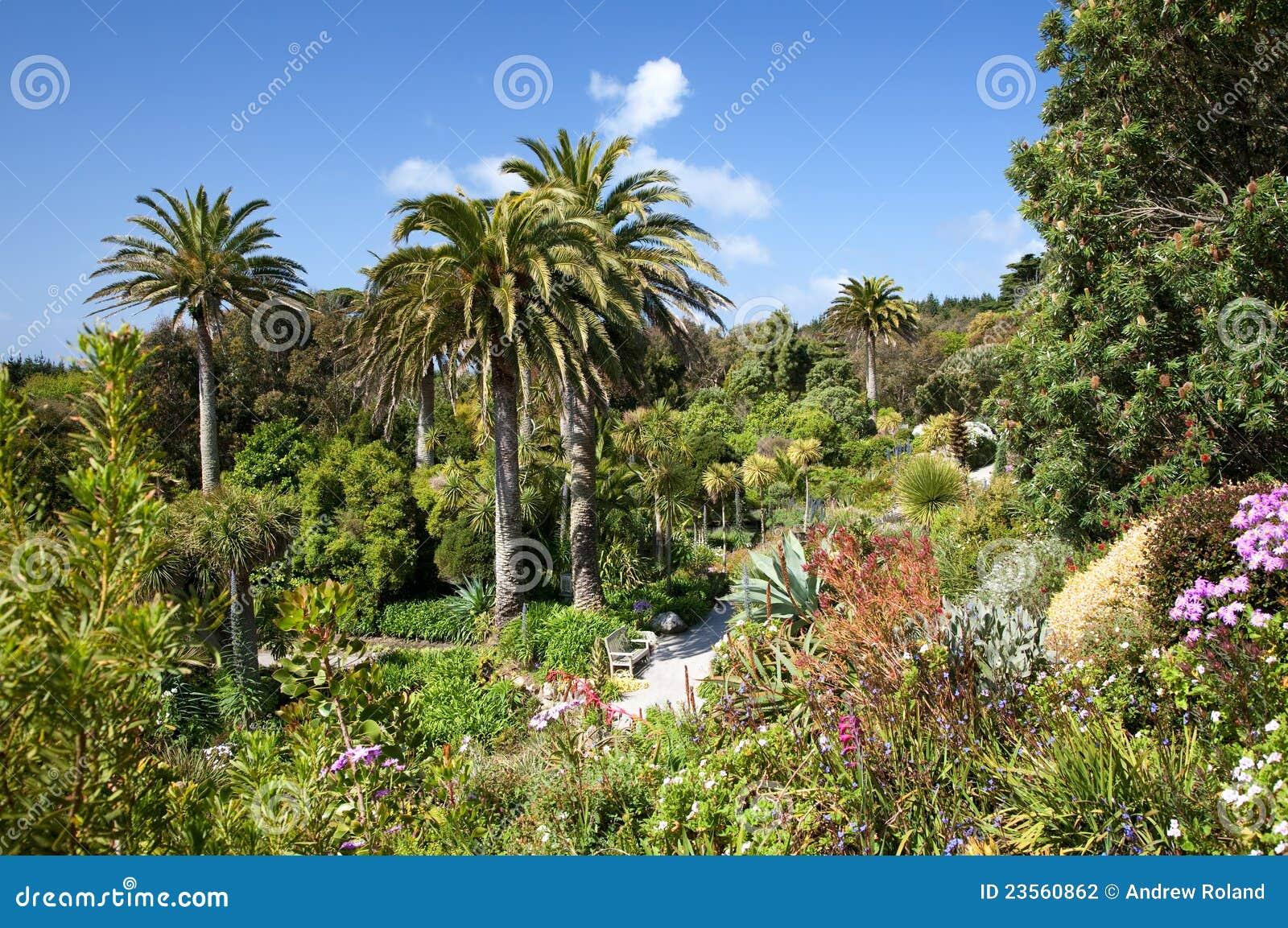 jardin tropical photographie stock image 23560862. Black Bedroom Furniture Sets. Home Design Ideas