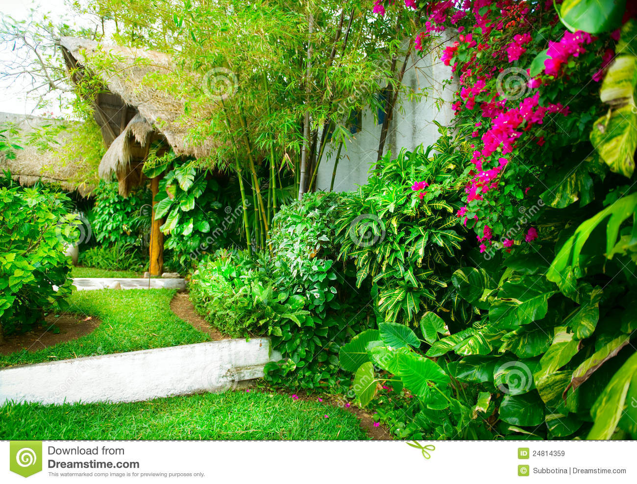Jardin tropical image stock image du construction herbe 24814359 - Amenagement jardin tropical ...