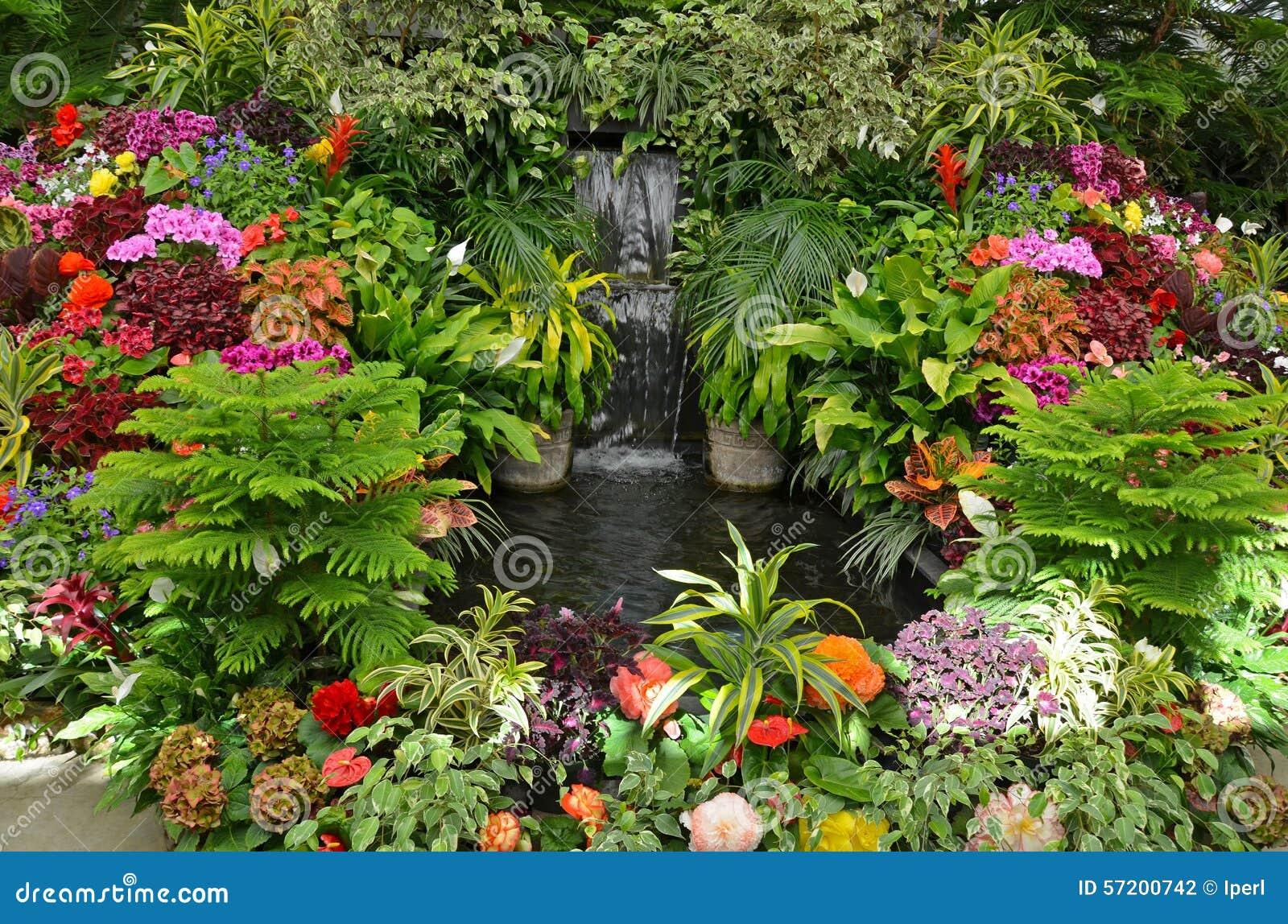 Jardin tropical color photo stock image 57200742 for Jardin tropical plantas