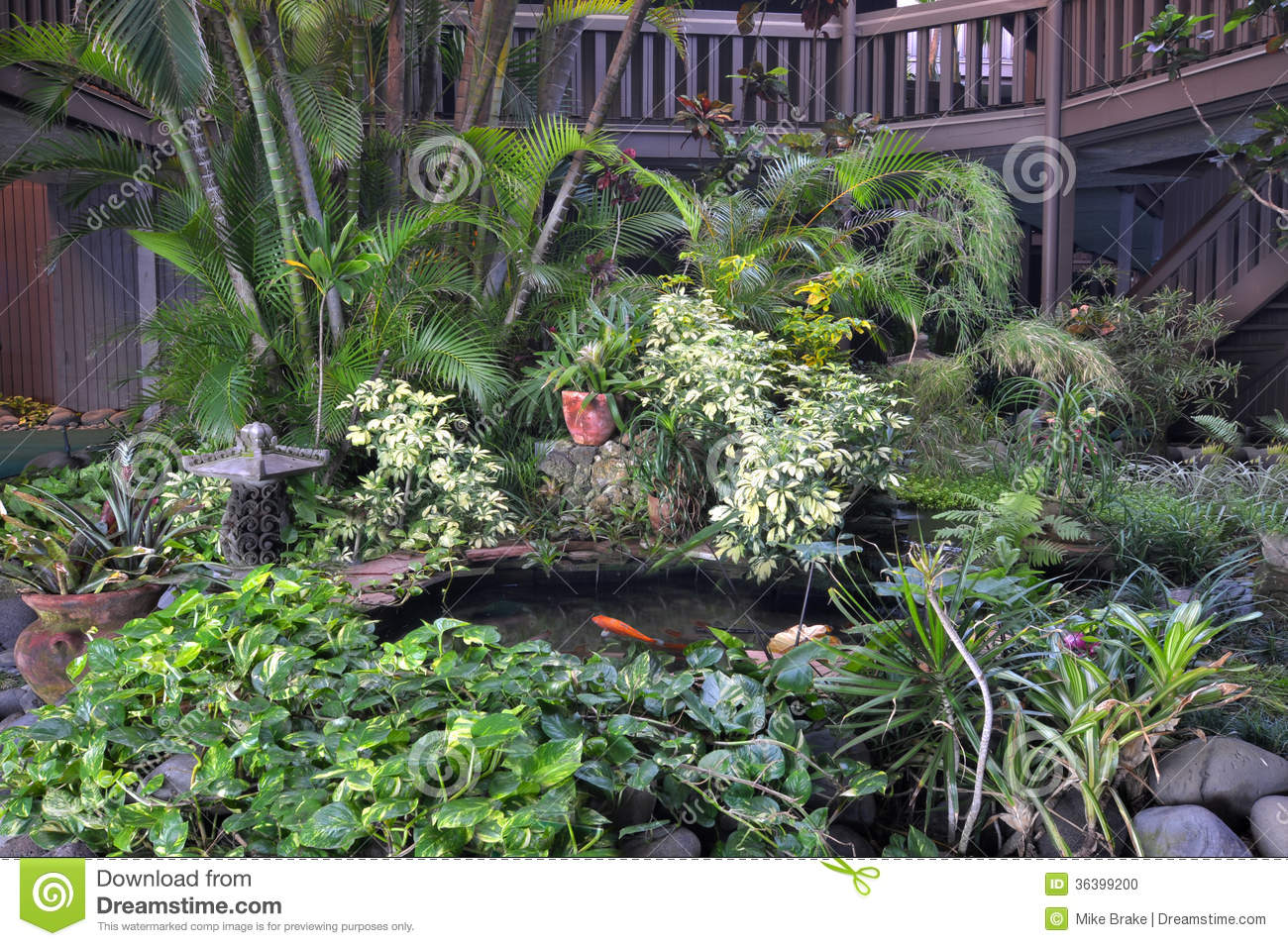 Jardin tropical d 39 int rieur photo stock image 36399200 for Jardin d interieur