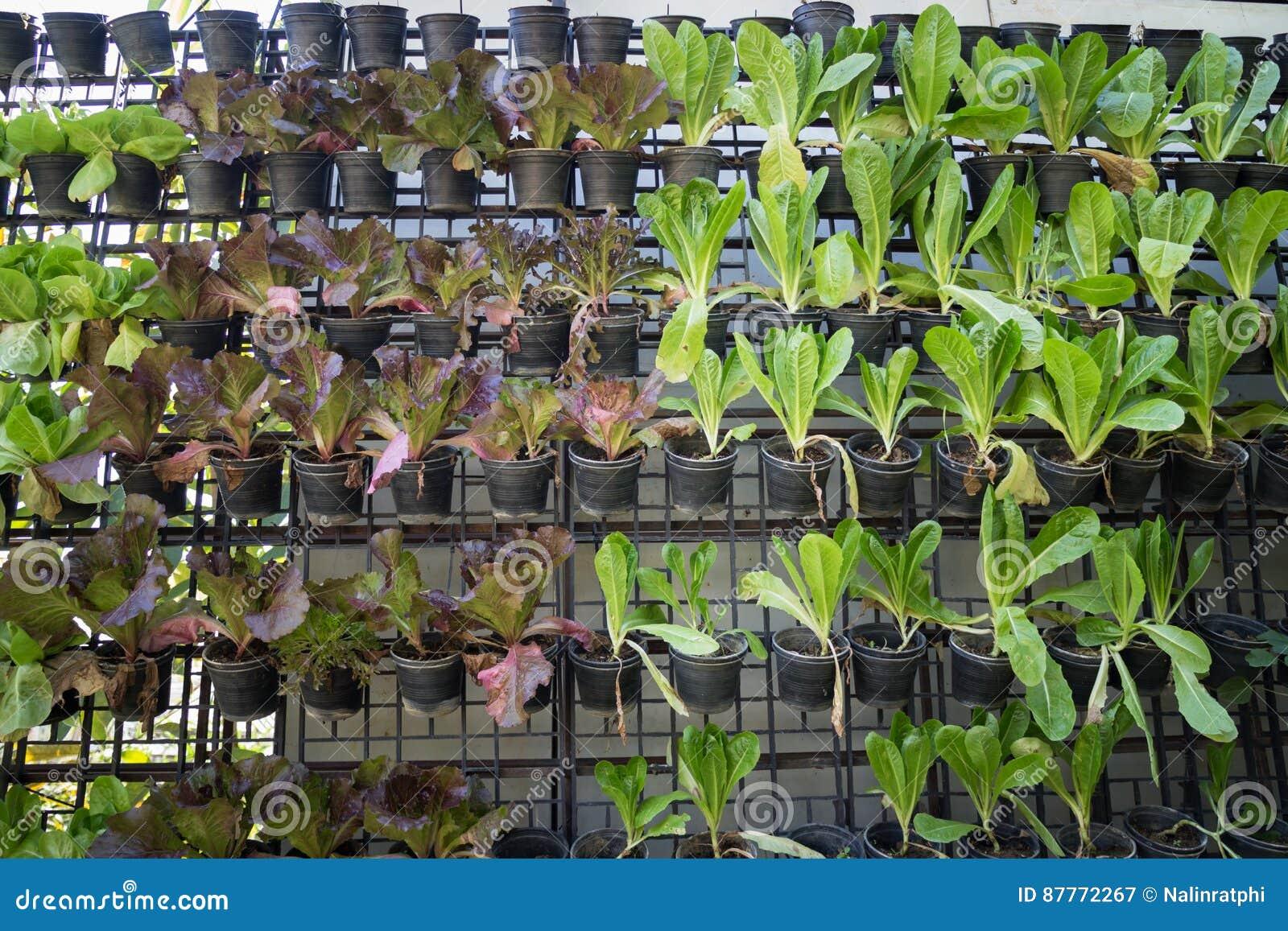 Mur Végétal Extérieur Palette jardin vertical de mur végétal vert image stock - image du