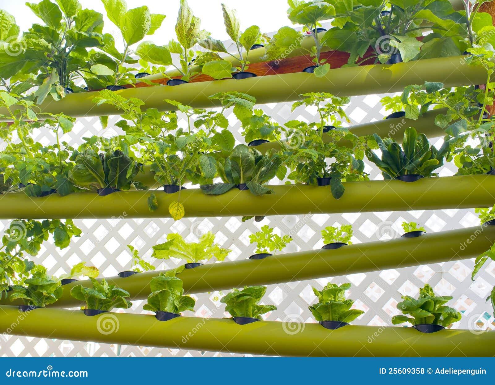 Jardin vertical hydroponique de la terre photos libres de for Jardin hydroponique