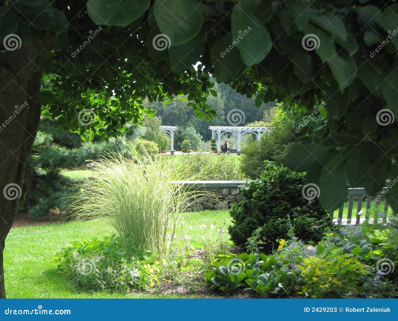 jardin vue de pelouse image stock image du feuillage 2429203. Black Bedroom Furniture Sets. Home Design Ideas