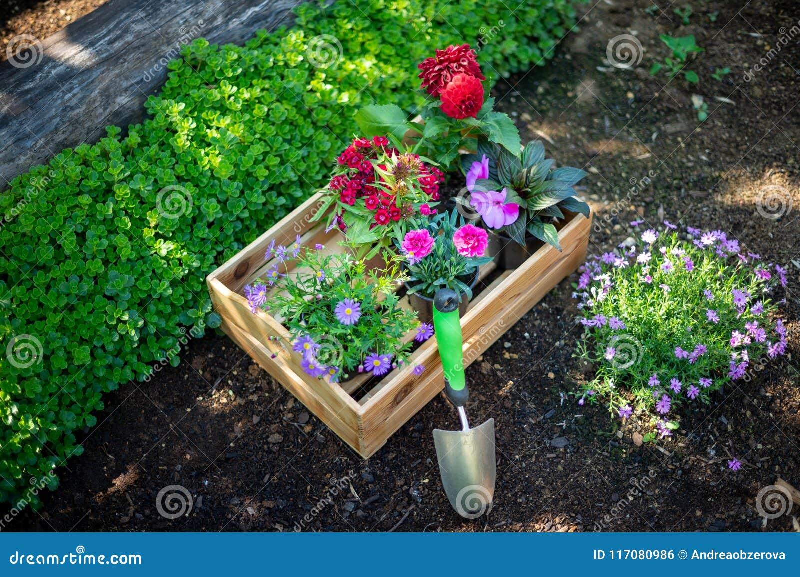 Planter Dans Une Caisse En Bois jardinage caisse complètement d'usines magnifiques et d