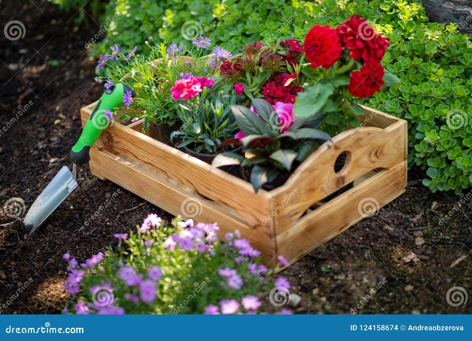 Planter Dans Une Caisse En Bois jardinage caisse complètement d'usines magnifiques prêtes