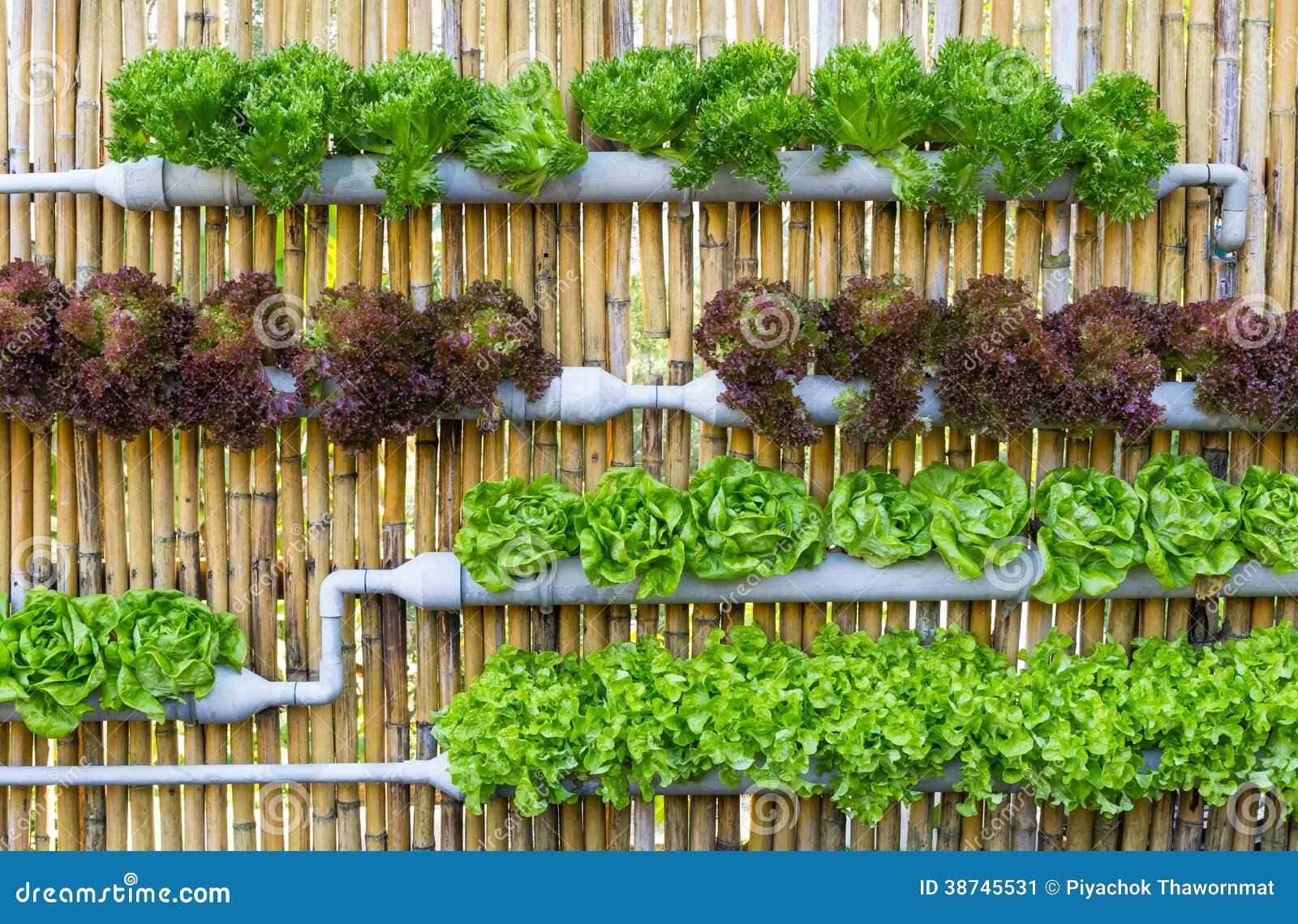 Jardinage hydroponique de verticale image stock image du - Colture idroponiche in casa ...
