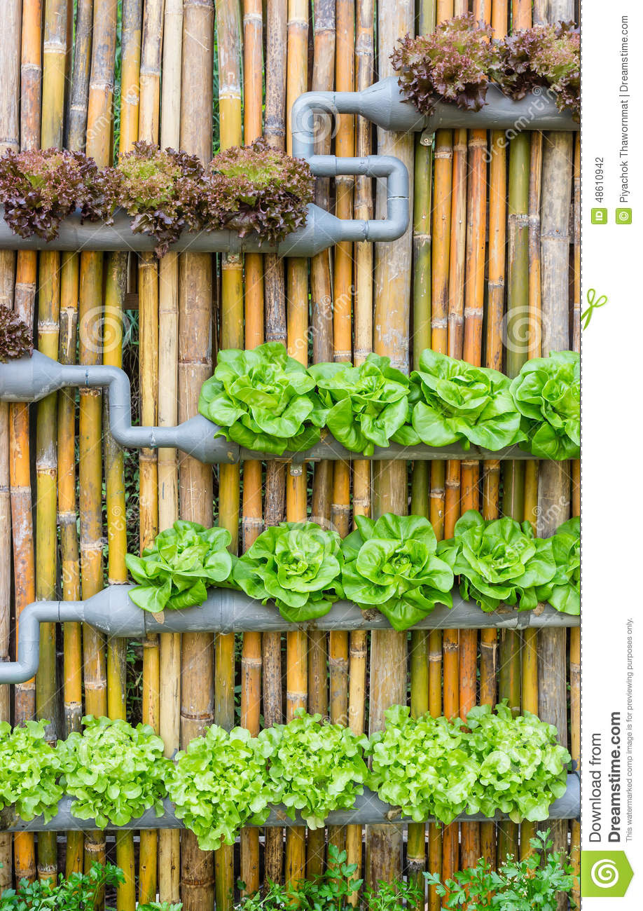 Jardinage hydroponique de verticale photo stock image du for A la verticale du jardin grenoble