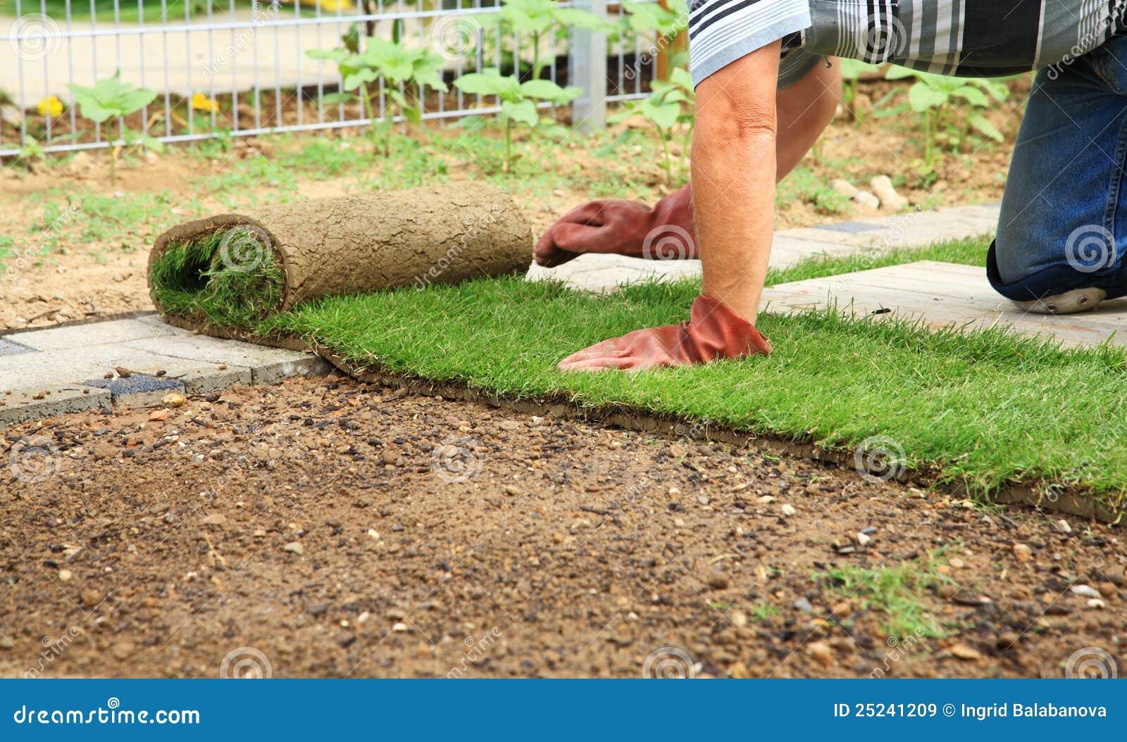 Jardinagem - colocando o sod para o gramado novo