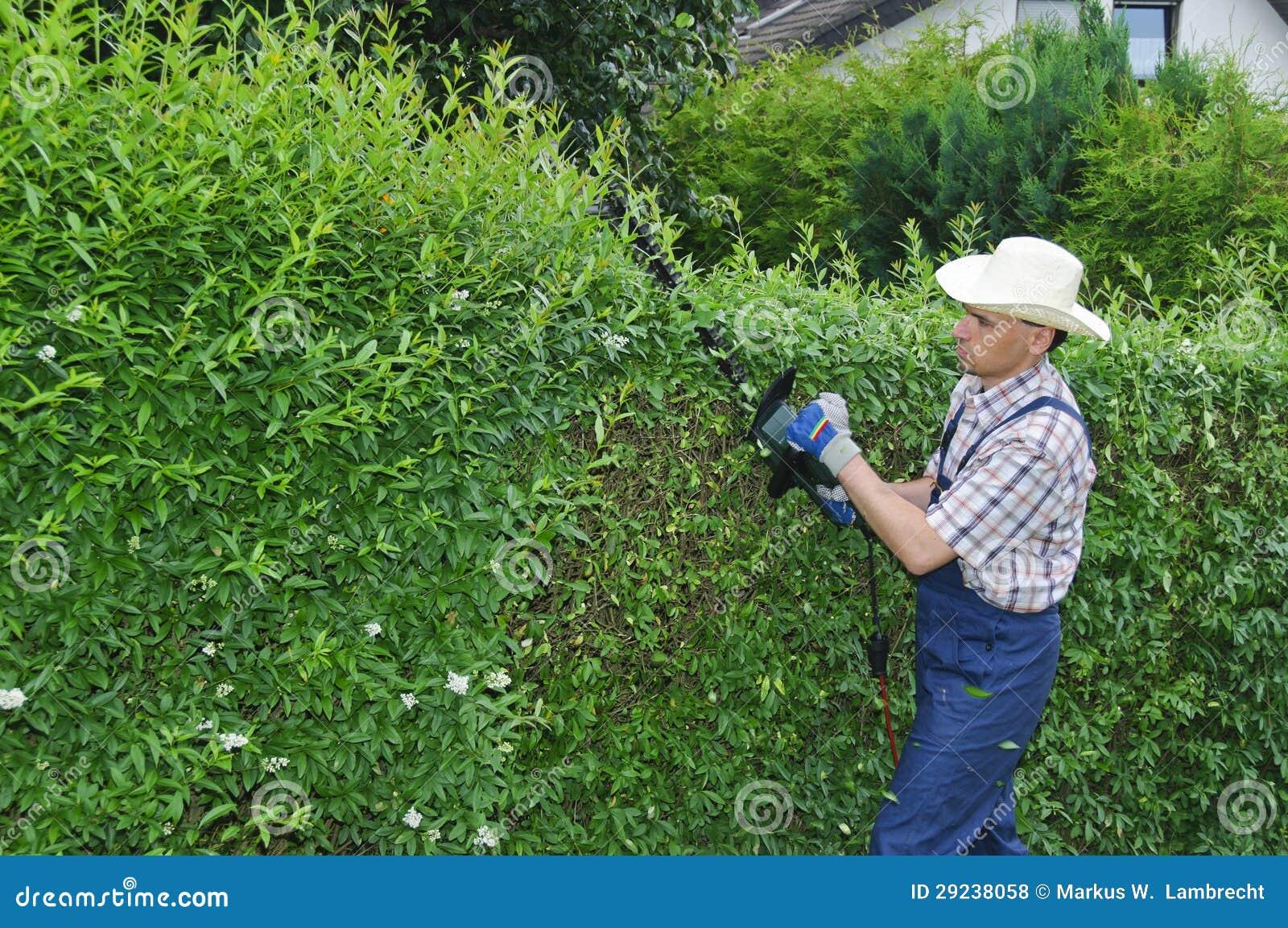 Download Jardinagem, Cortando A Conversão Foto de Stock - Imagem de cuidado, homem: 29238058