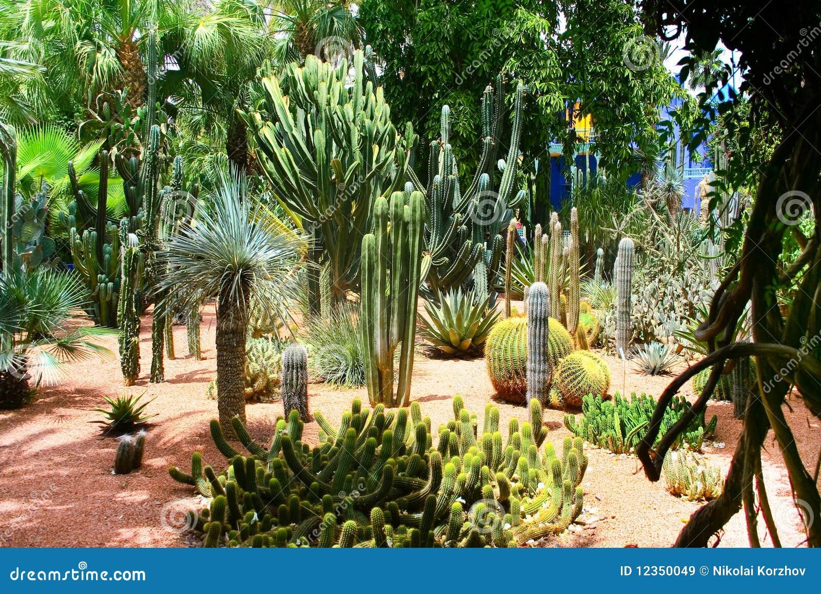 Jardine majorelle in marrakesh morocco royalty free stock for Jardin jardine