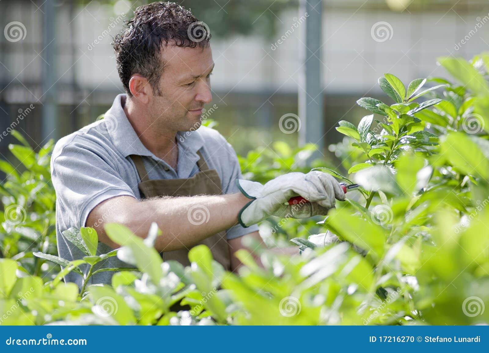 Jardineiro de sorriso