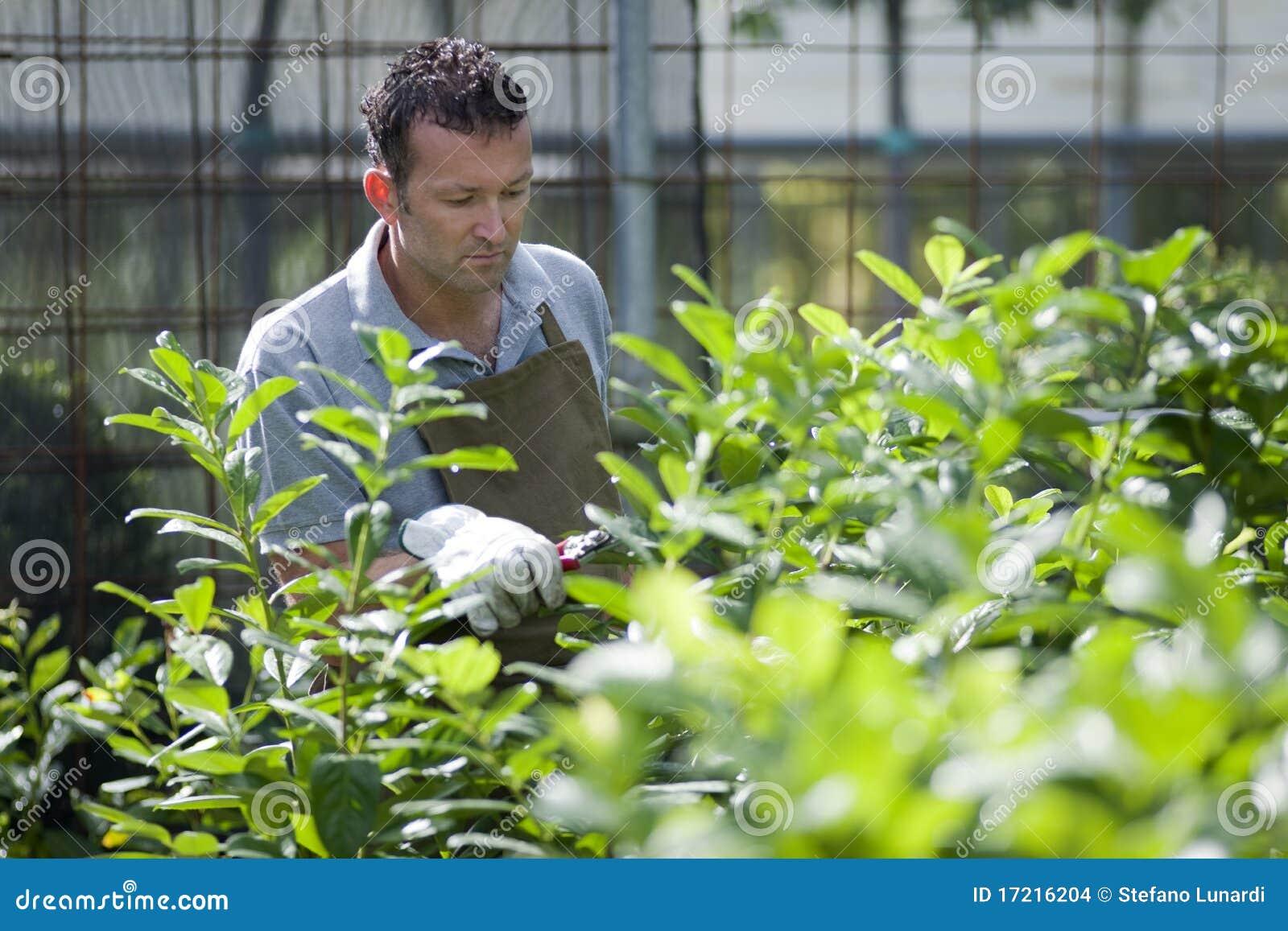 Jardineiro no trabalho