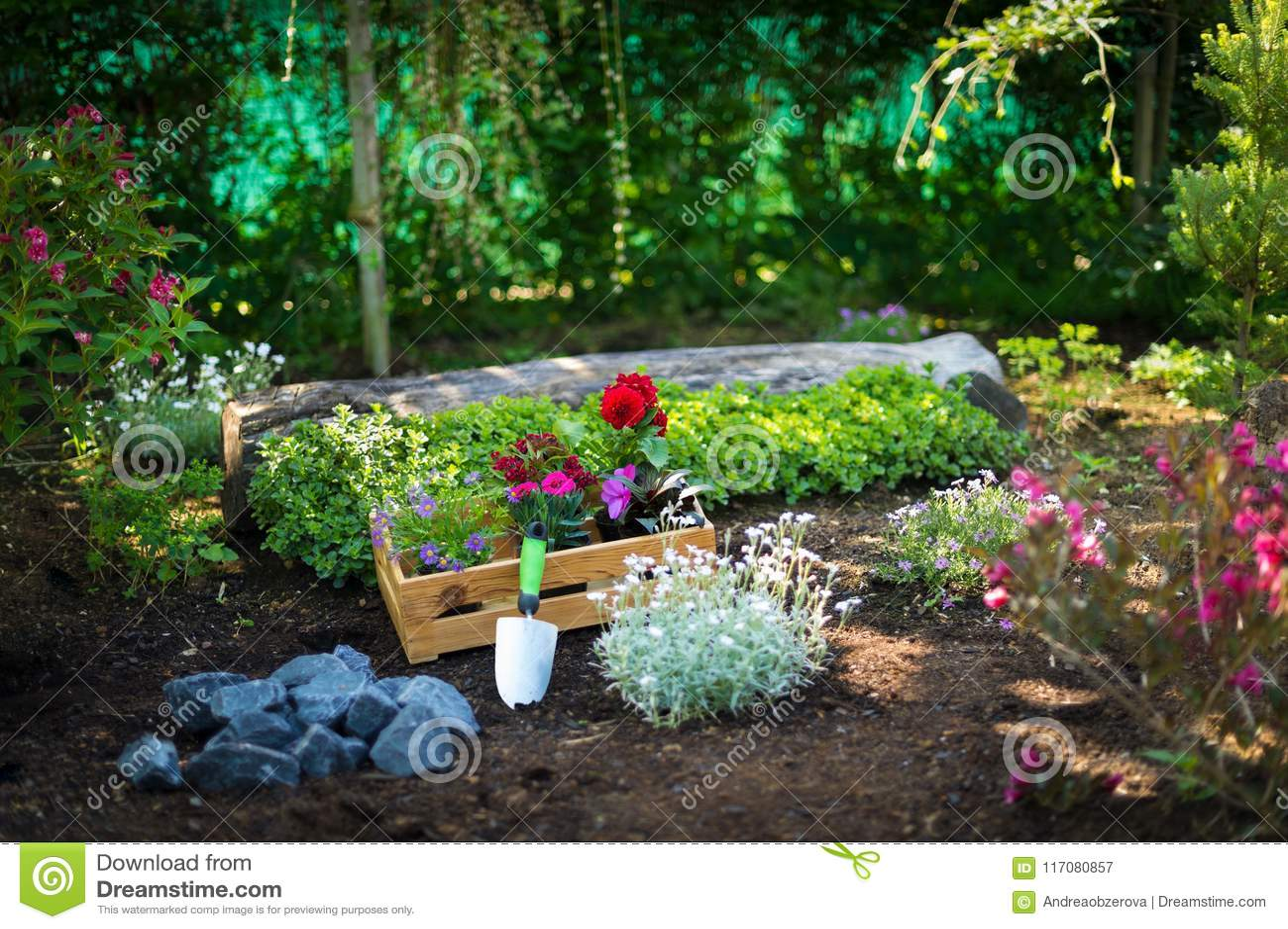 Jardinería Cajón por completo de plantas magníficas y de utensilios de jardinería listos para plantar en Sunny Garden Trabajos de