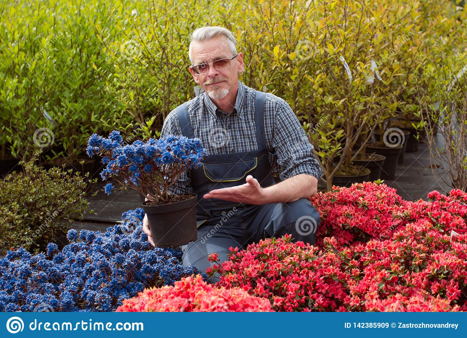 Jardinerie de directeur près de la fenêtre de magasin avec des fleurs Il tient un pot de fleur