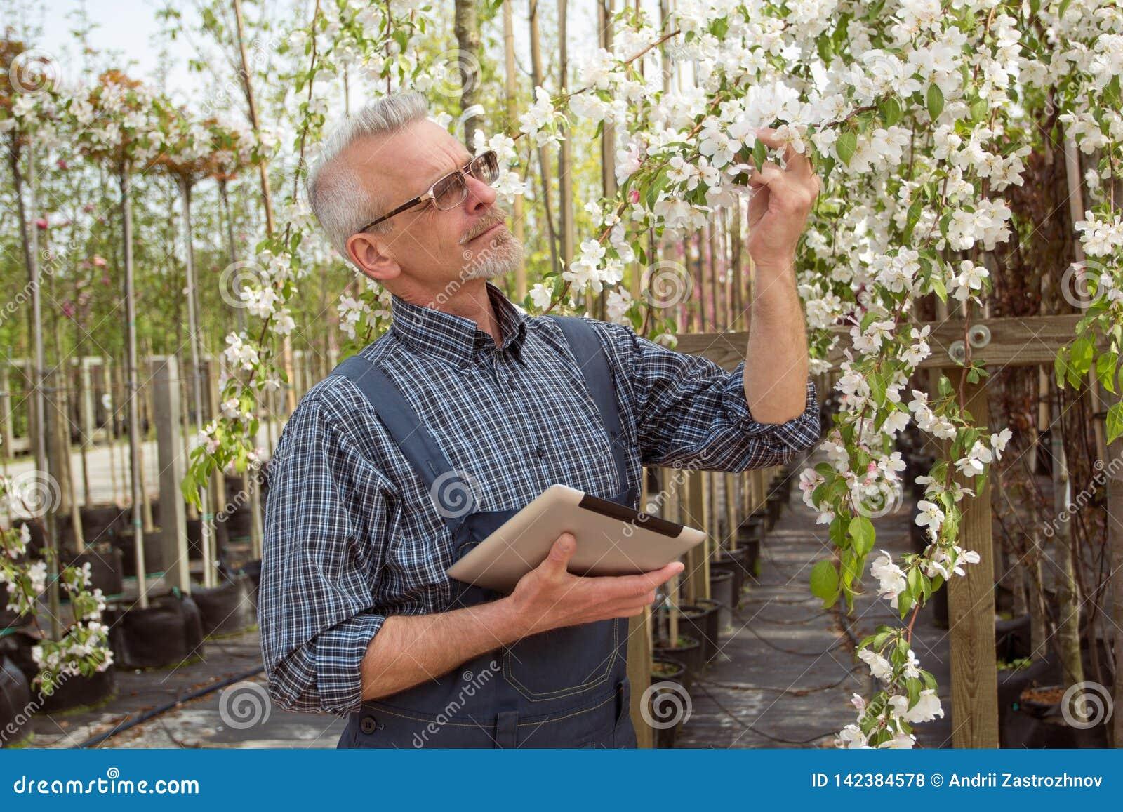 Jardinero que sostiene una flor La nueva variedad del color