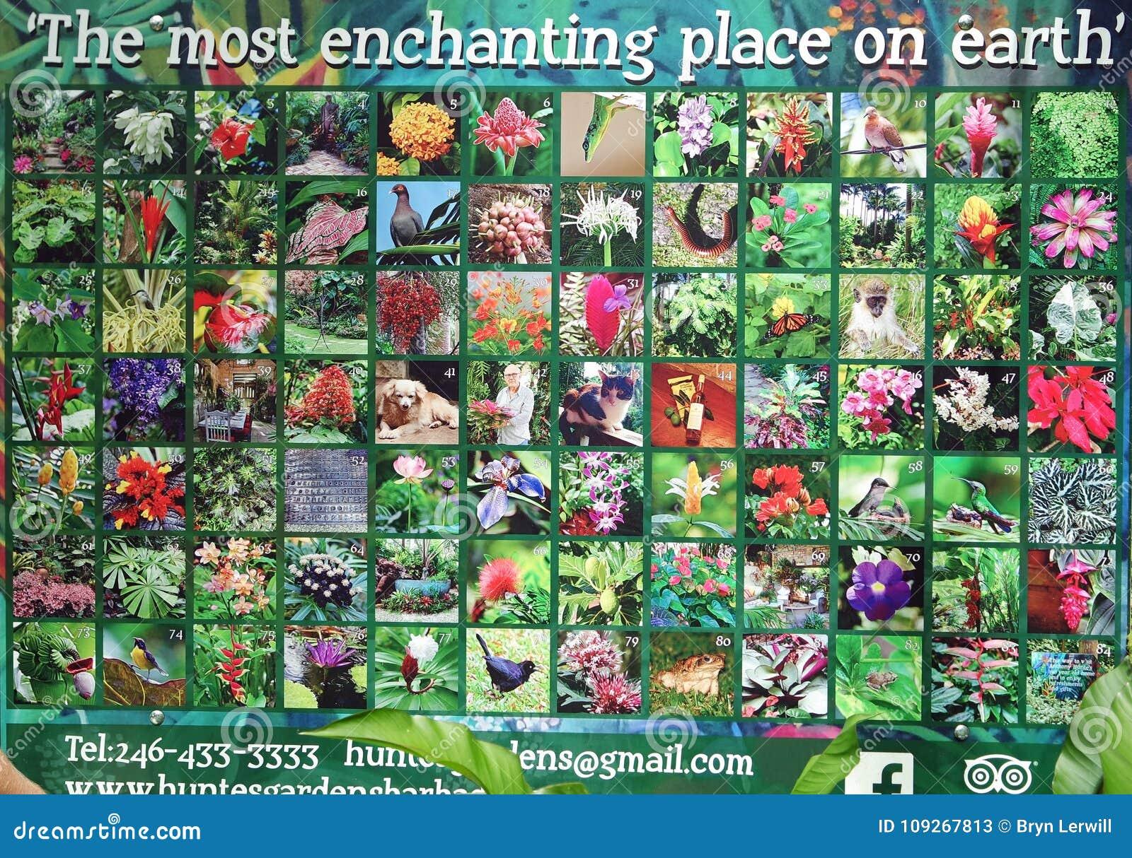 Jardines Barbados del ` s de Hunte