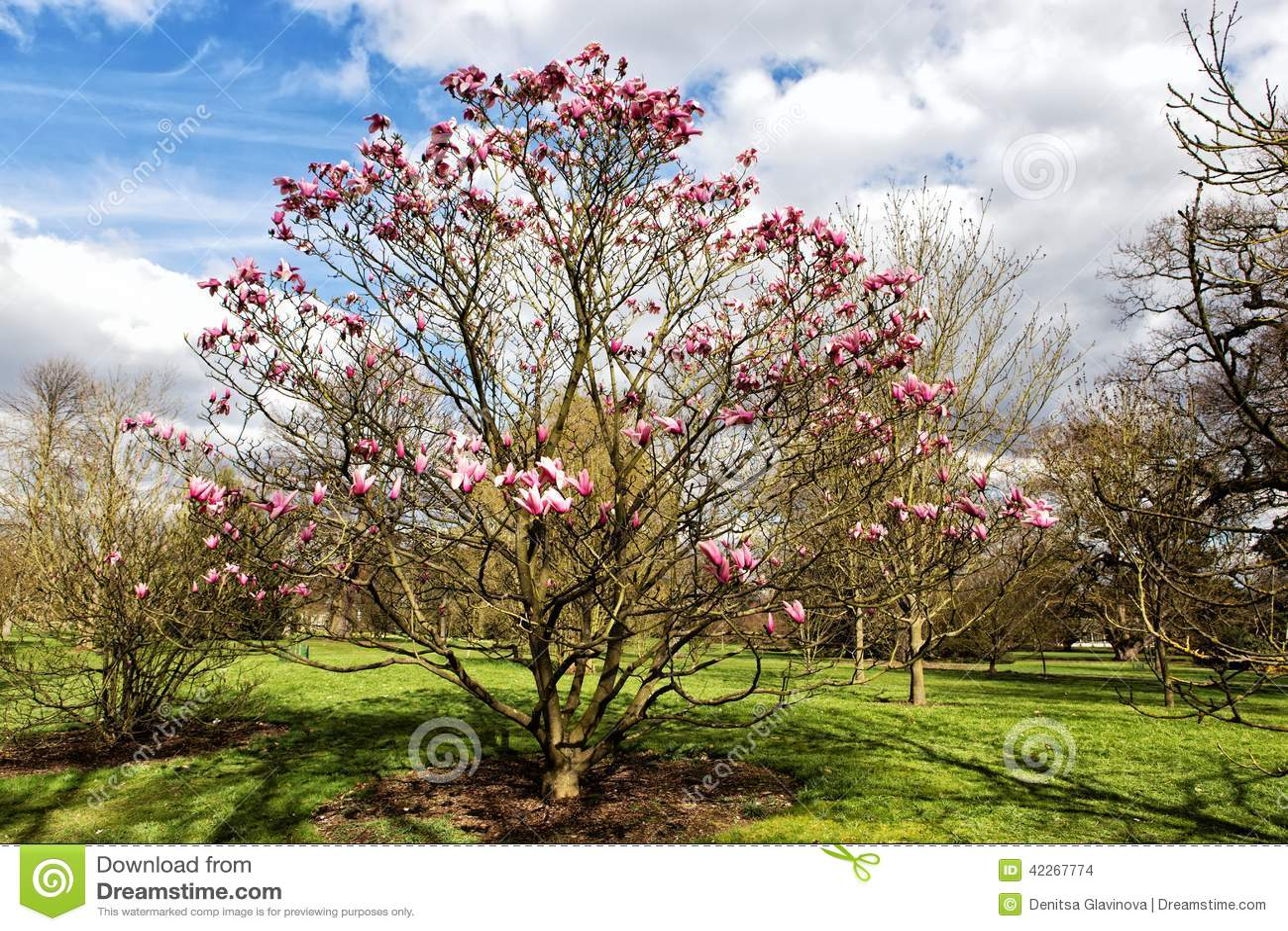 Jardines de kew en londres en la primavera foto de archivo for Jardines de primavera