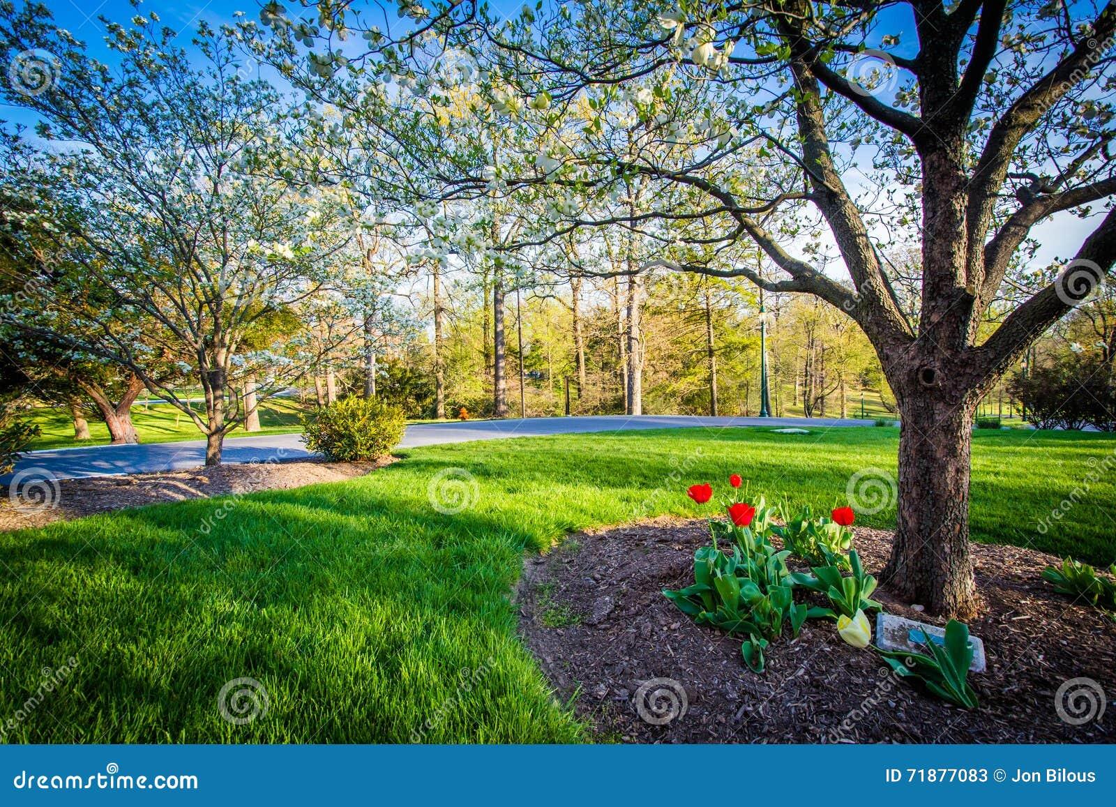 Jardines y rboles en notre dame de la universidad de maryland en balti imagen de archivo - Arboles jardin ...