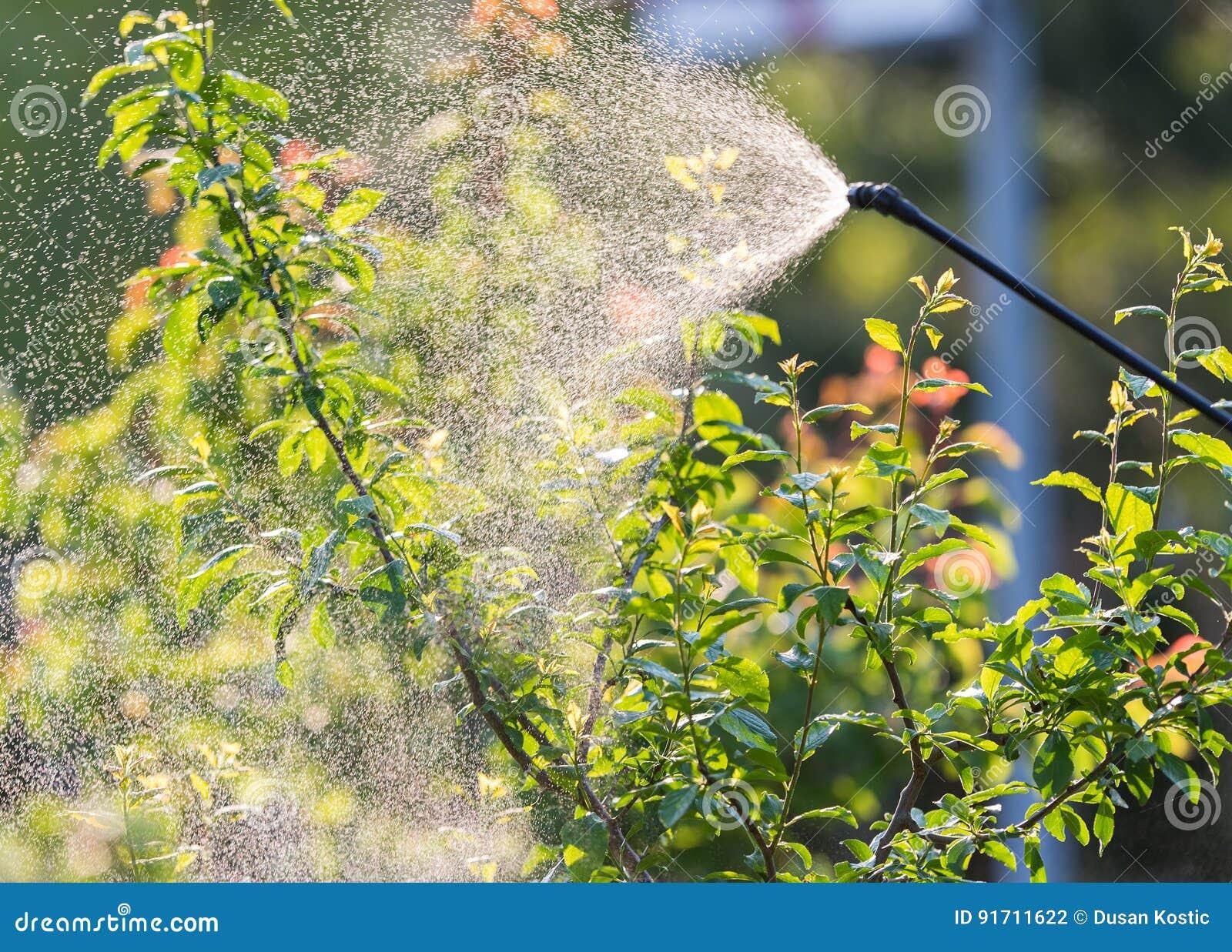 Jardinier appliquant un engrais d insecticide à ses arbustes de fruit