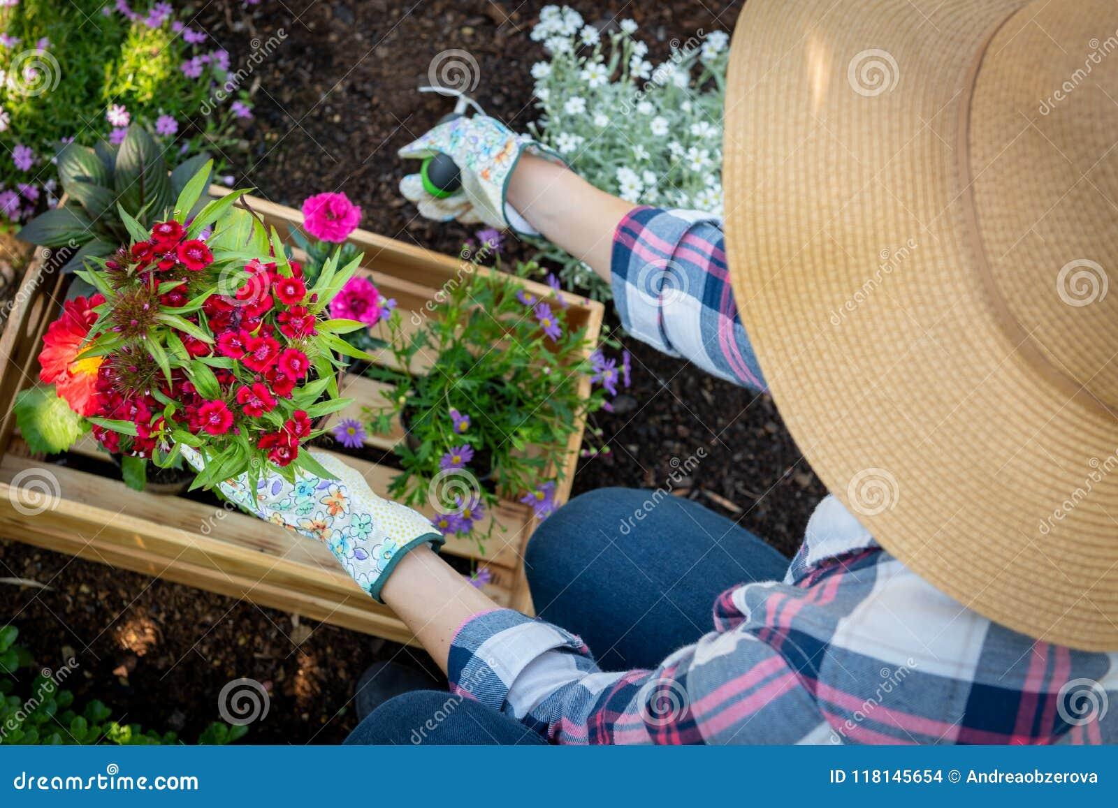 Jardinier féminin méconnaissable plantant des fleurs dans son jardin Jardinage Vue supplémentaire