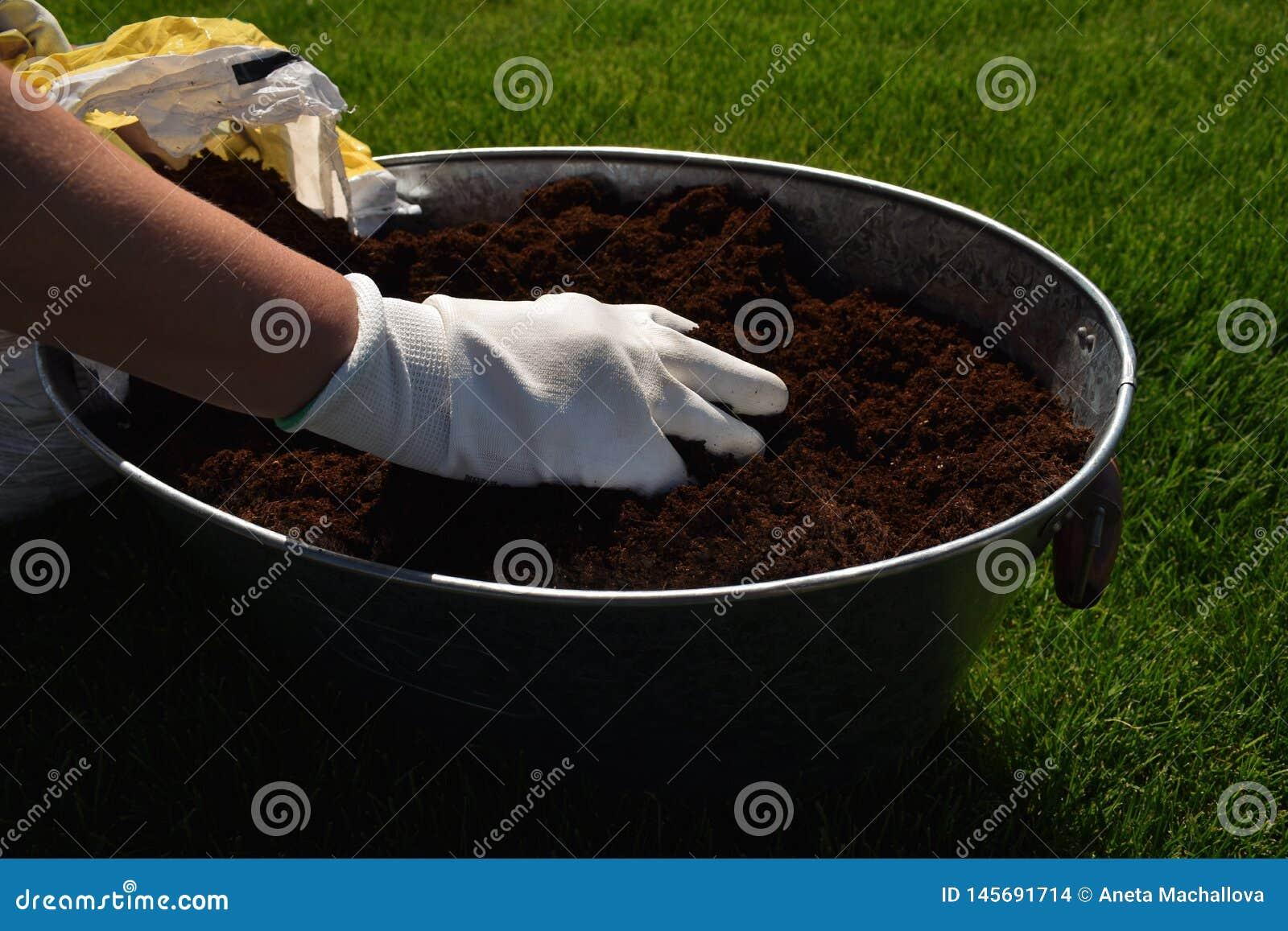 Jardinier f?minin m?connaissable jugeant la belle fleur pr?te ? ?tre plant? dans un jardin