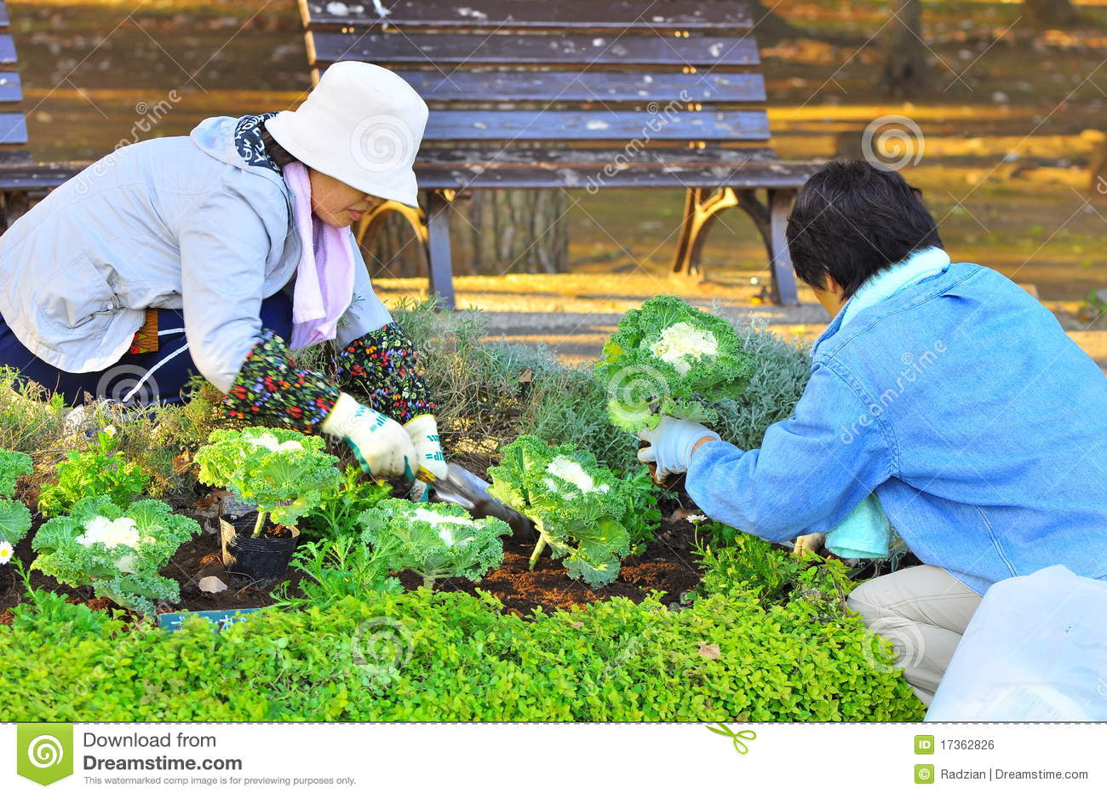 Jardinier japonais photo ditorial image 17362826 for Conseil de jardinier