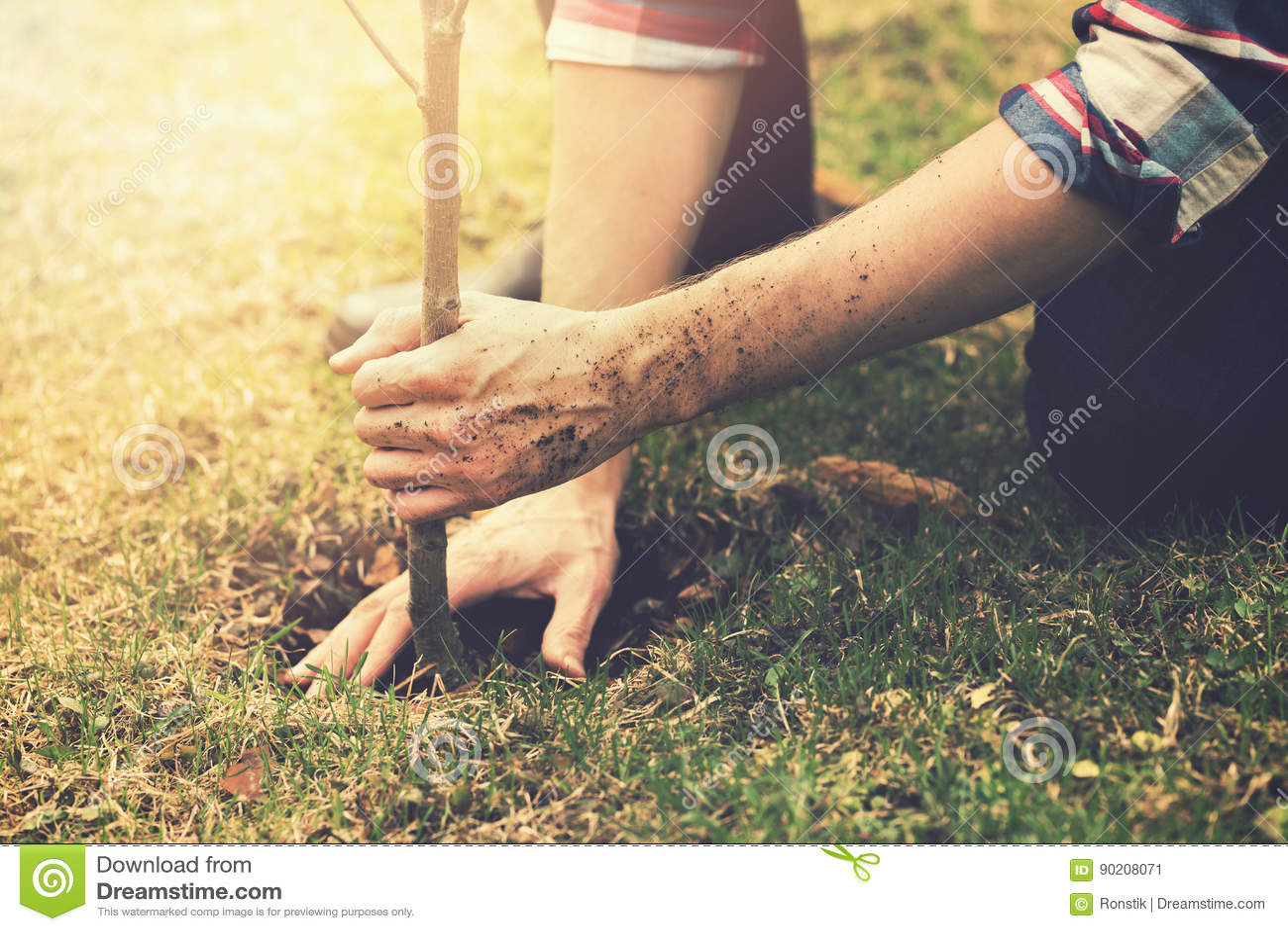 Jardinier plantant un arbre