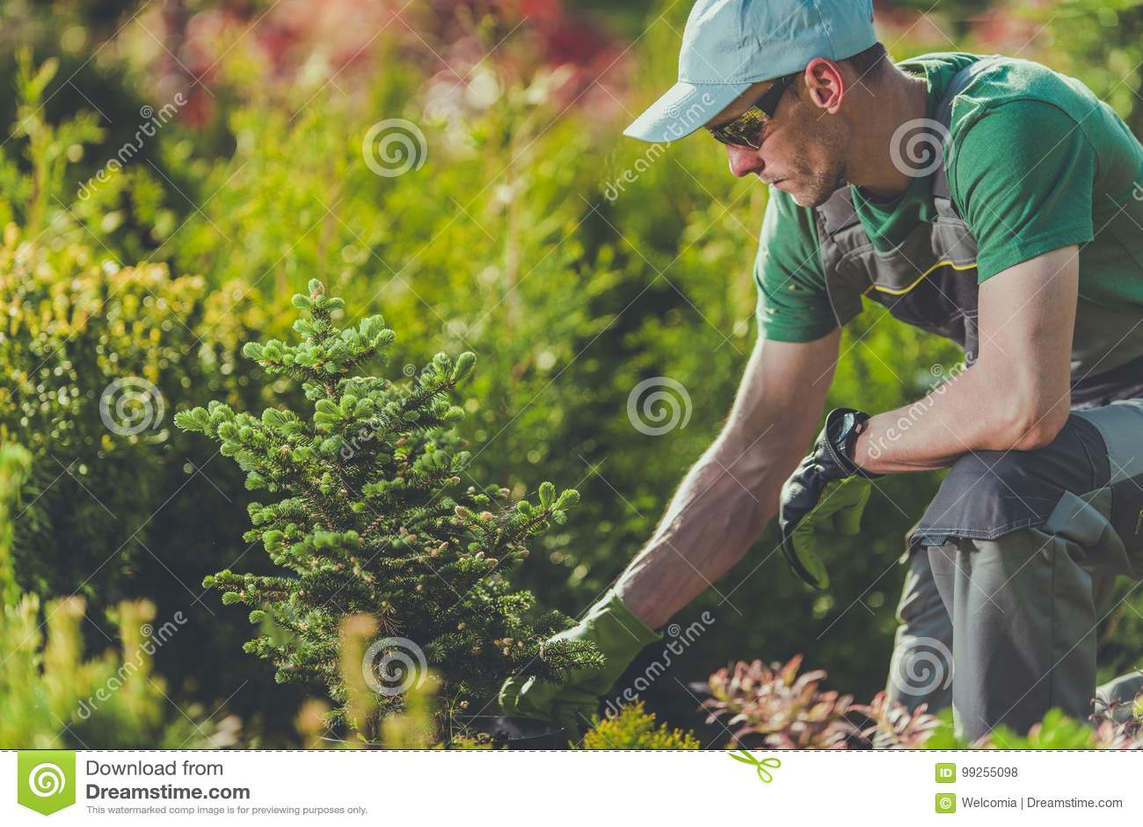 Jardinier Planting New Trees