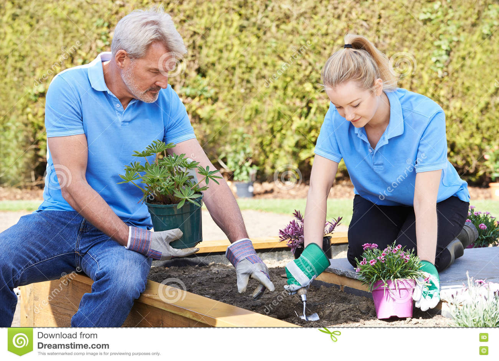 Jardiniers de paysage plantant dans le lit de fleur