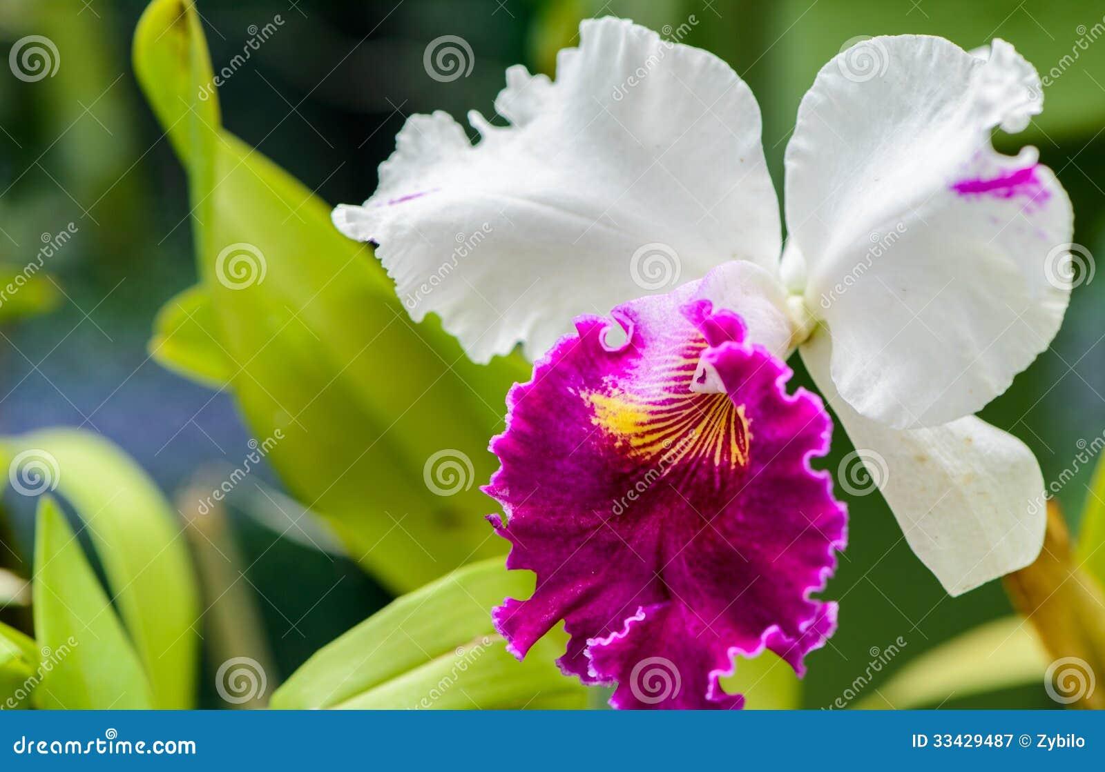Jardins botânicos reais. Tipos diferentes de orquídeas