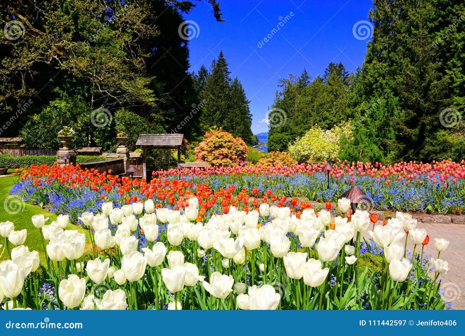 Jardins de Butchart, Victoria, Canada, tulipes vibrantes de ressort