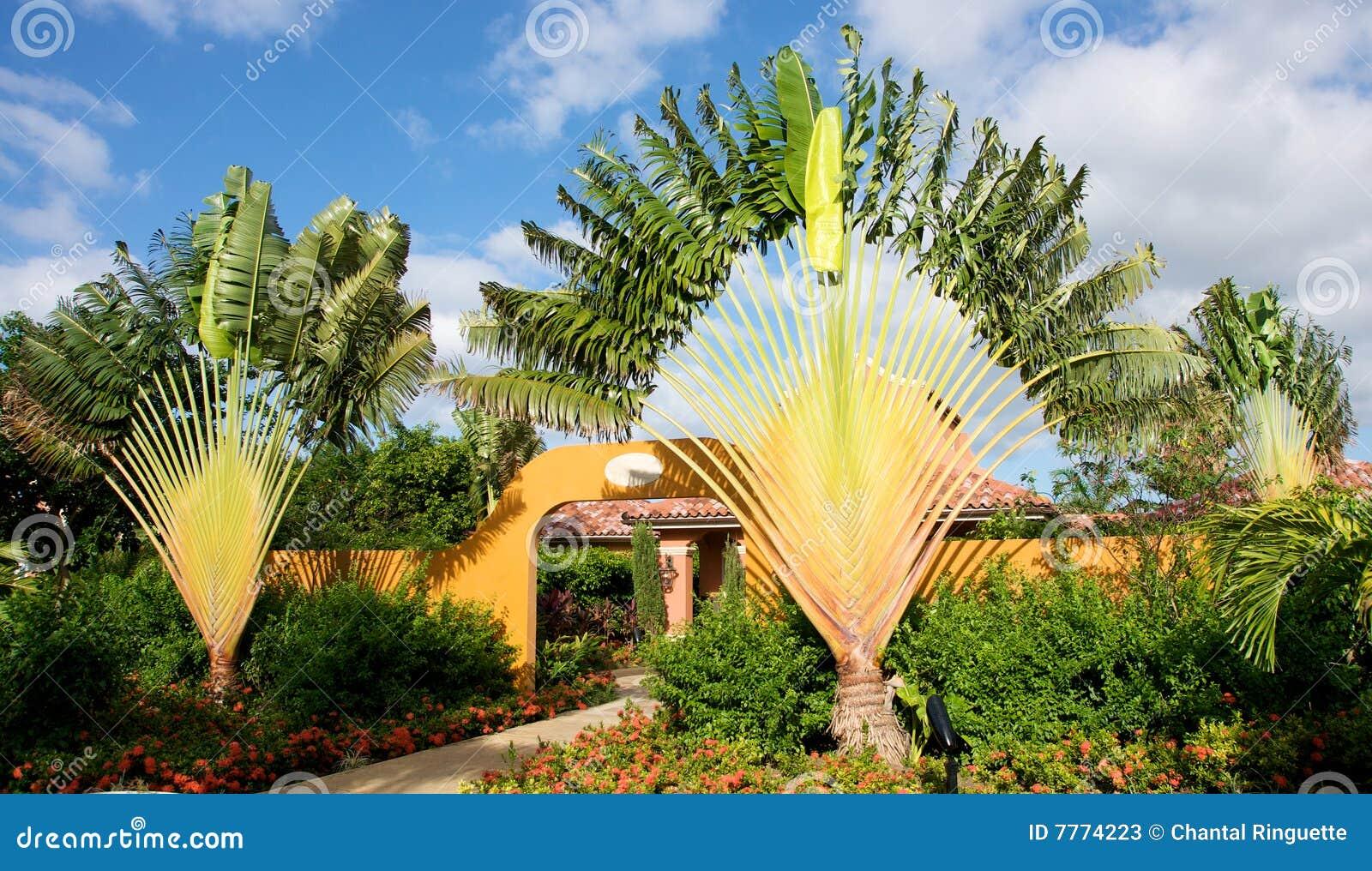 imagens jardins lindos:Fotos de Stock: Jardins tropicais bonitos