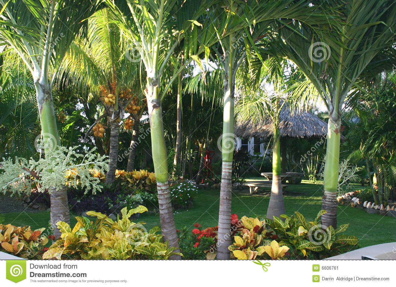 fotos jardins tropicais:Tropical Rock Garden