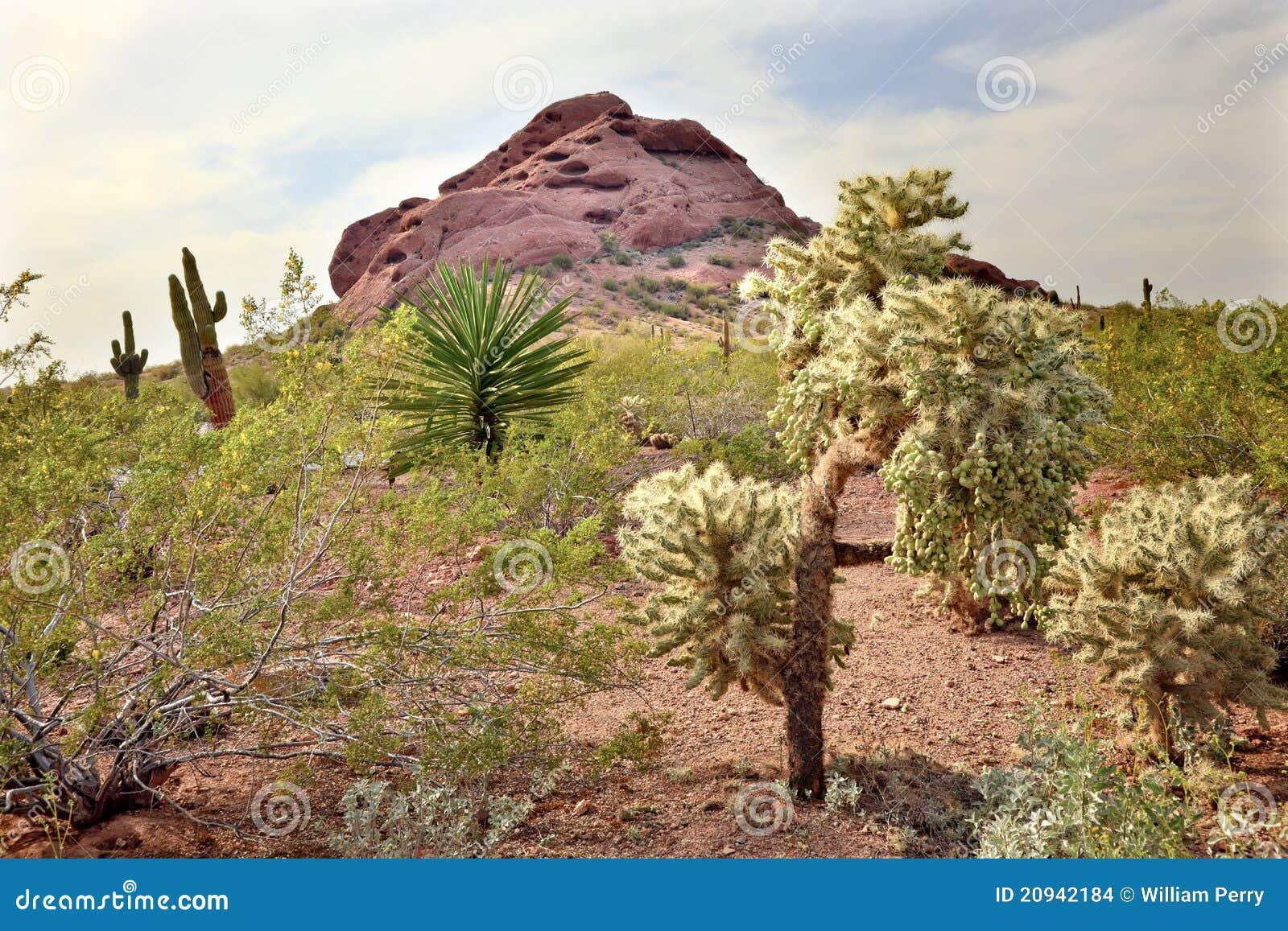 Jard n bot nico phoenix del desierto de los rboles de for Arboles del jardin botanico