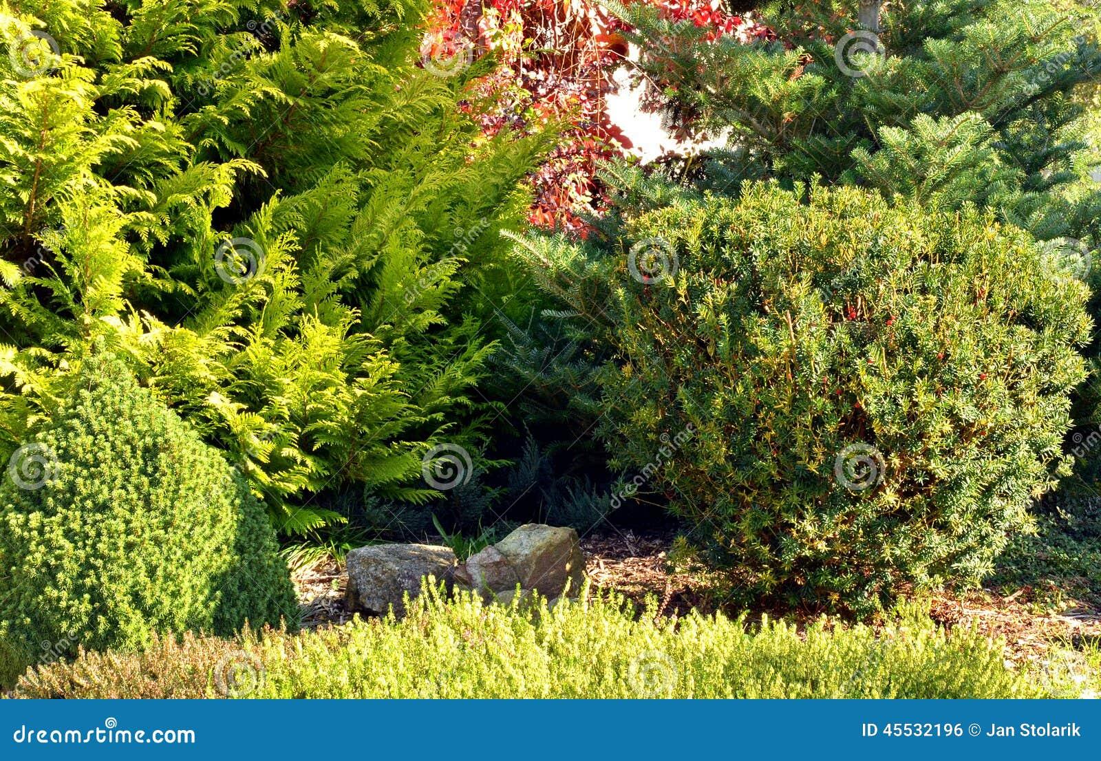 Jard n con los rboles y los arbustos foto de archivo - Jardin con arboles ...