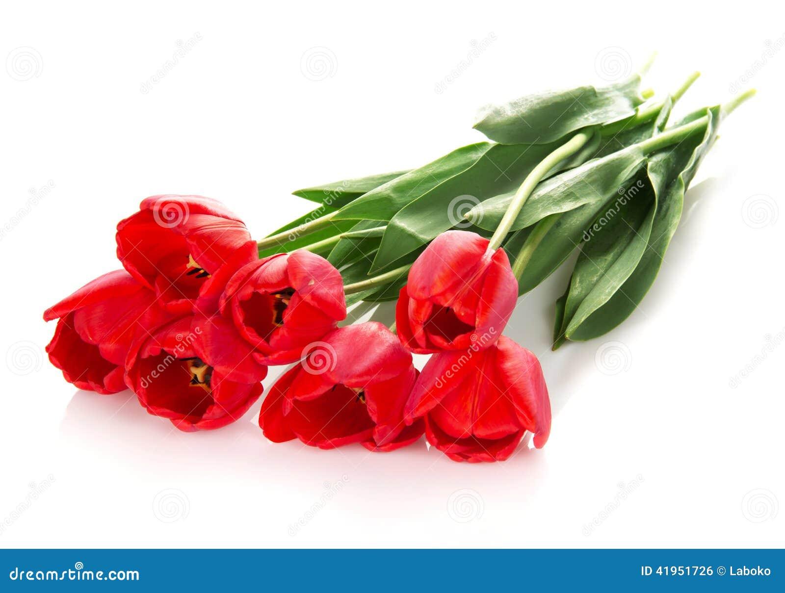 Jaskrawi czerwoni tulipany