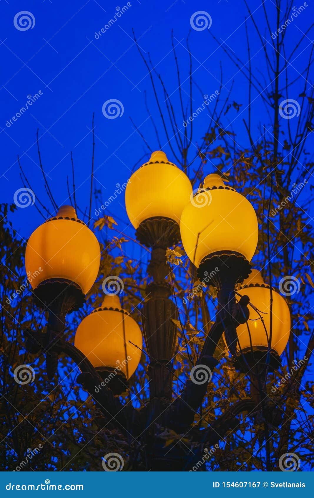 Jaskrawy kruszcowy zaświecający lampion przeciw jesieni drzewom na opóźnionym zimnym wieczór i niebu
