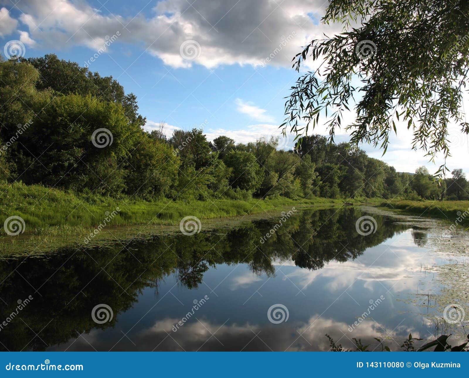 Jaskrawy pogodny letni dzień, Ñ  alm rzeka Brzeg przerastają z trawą