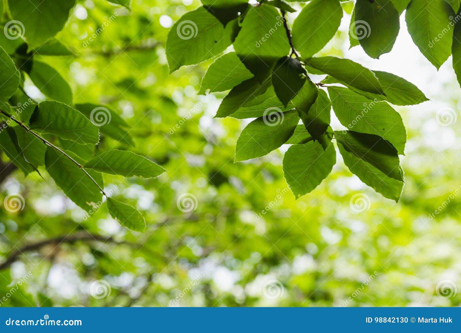 Jaskrawy - zieleń opuszcza tło tapetę