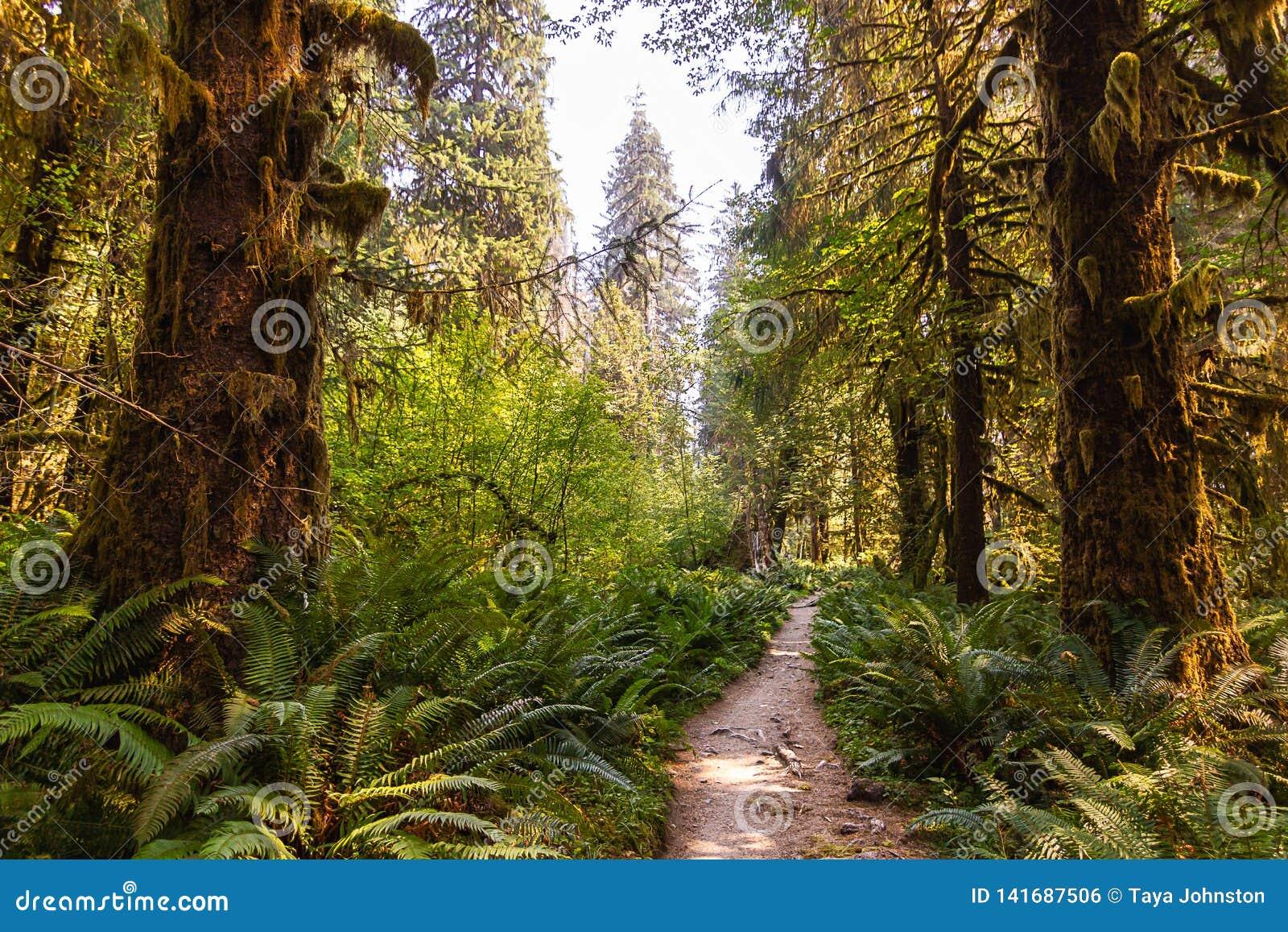 Jaskrawy - zielona ścieżka prowadzi głęboko w lato las