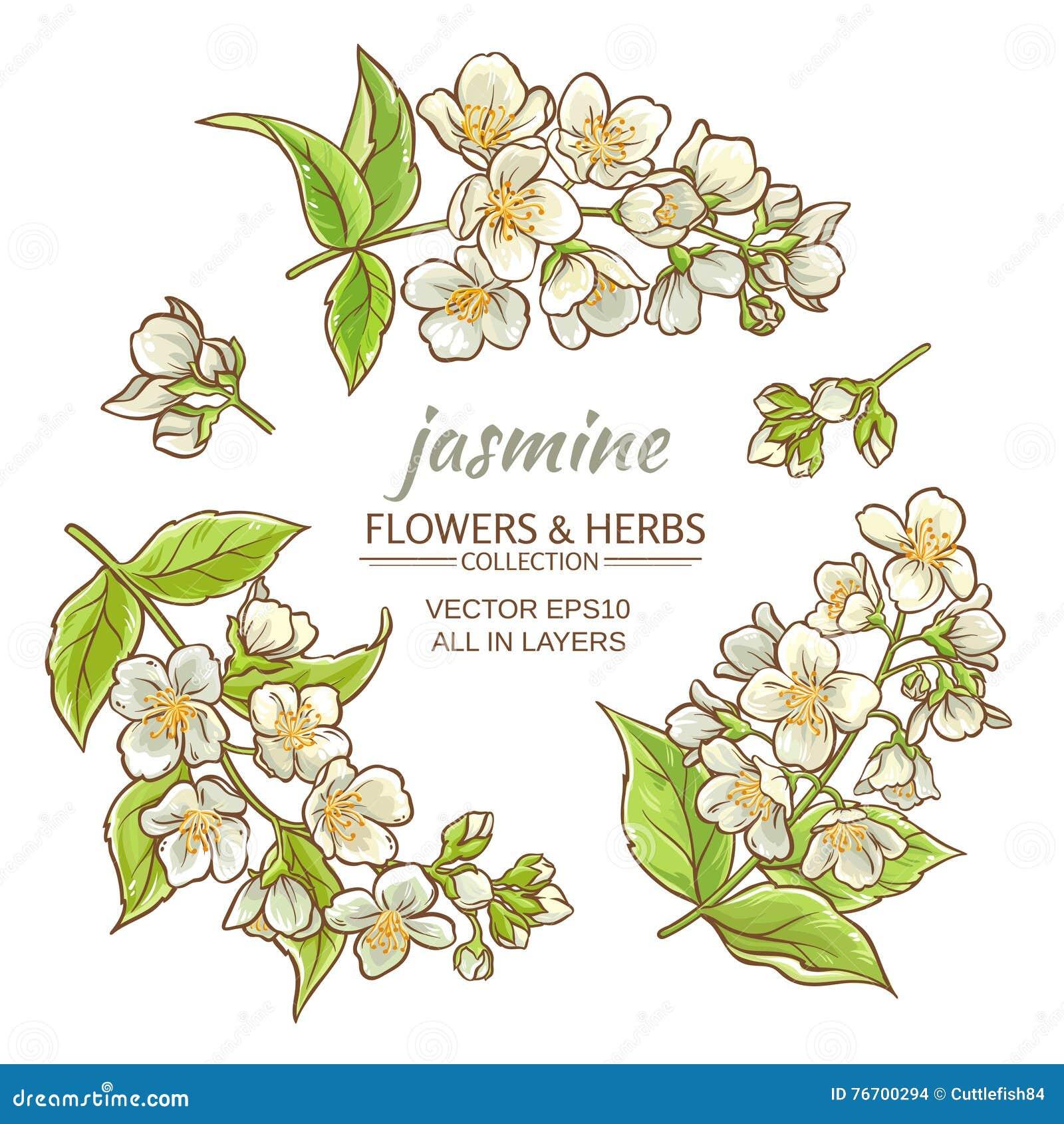 Jasminblommauppsättning