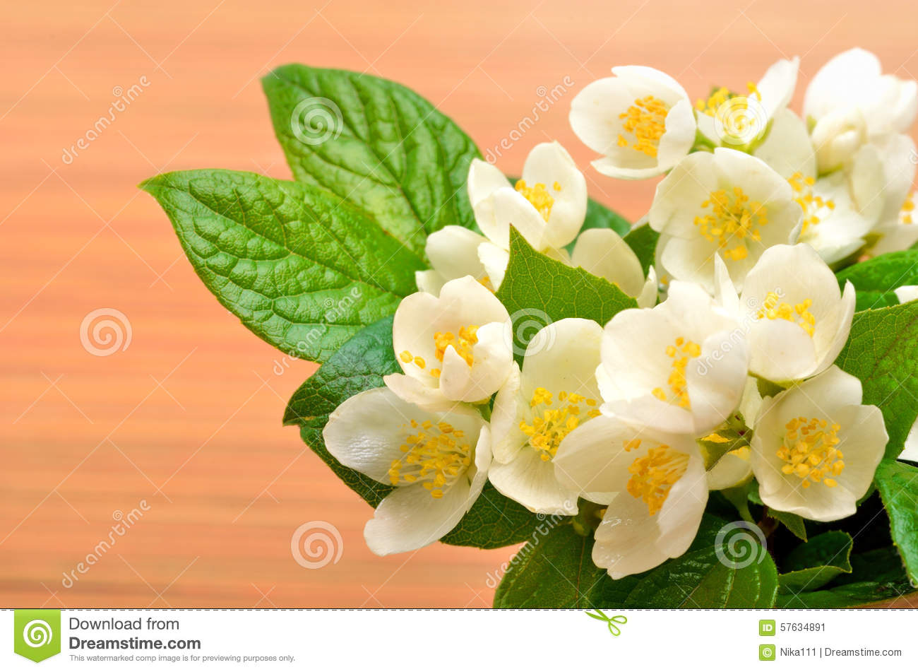 Jasmine flower bouquet on wood stock image image of flower jasmine flower bouquet on wood izmirmasajfo Image collections