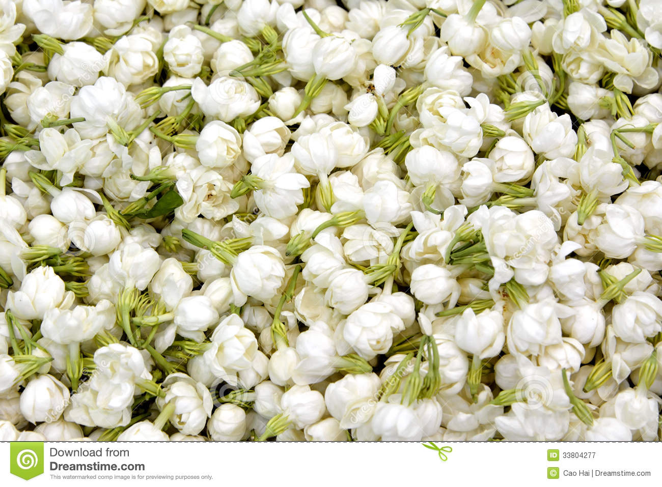 Full of Jasmine Flower as background, with green leaves and white ...