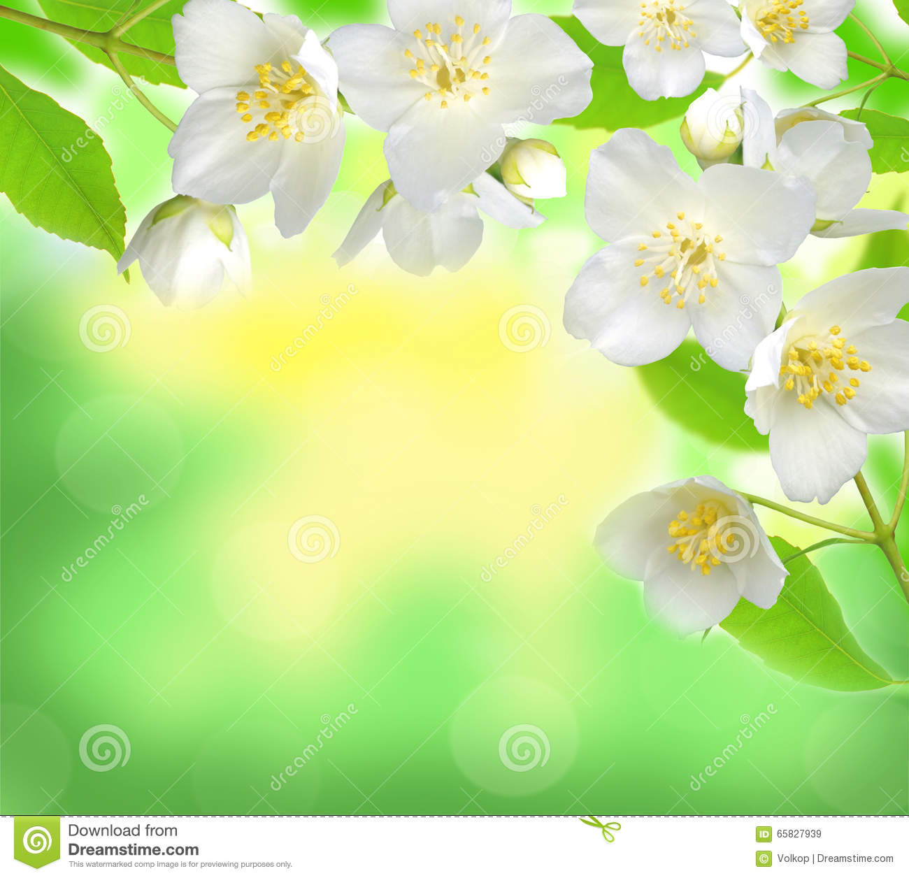 Jasmine Flower With Leaves Over Beautiful Nature